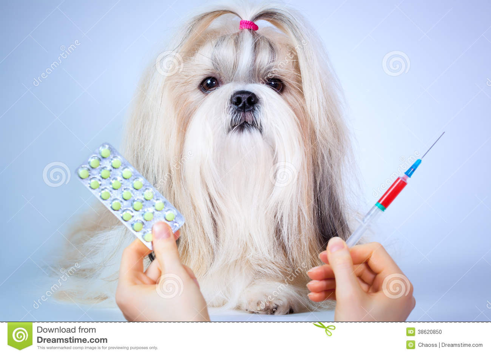 Shih tzu dog treatment