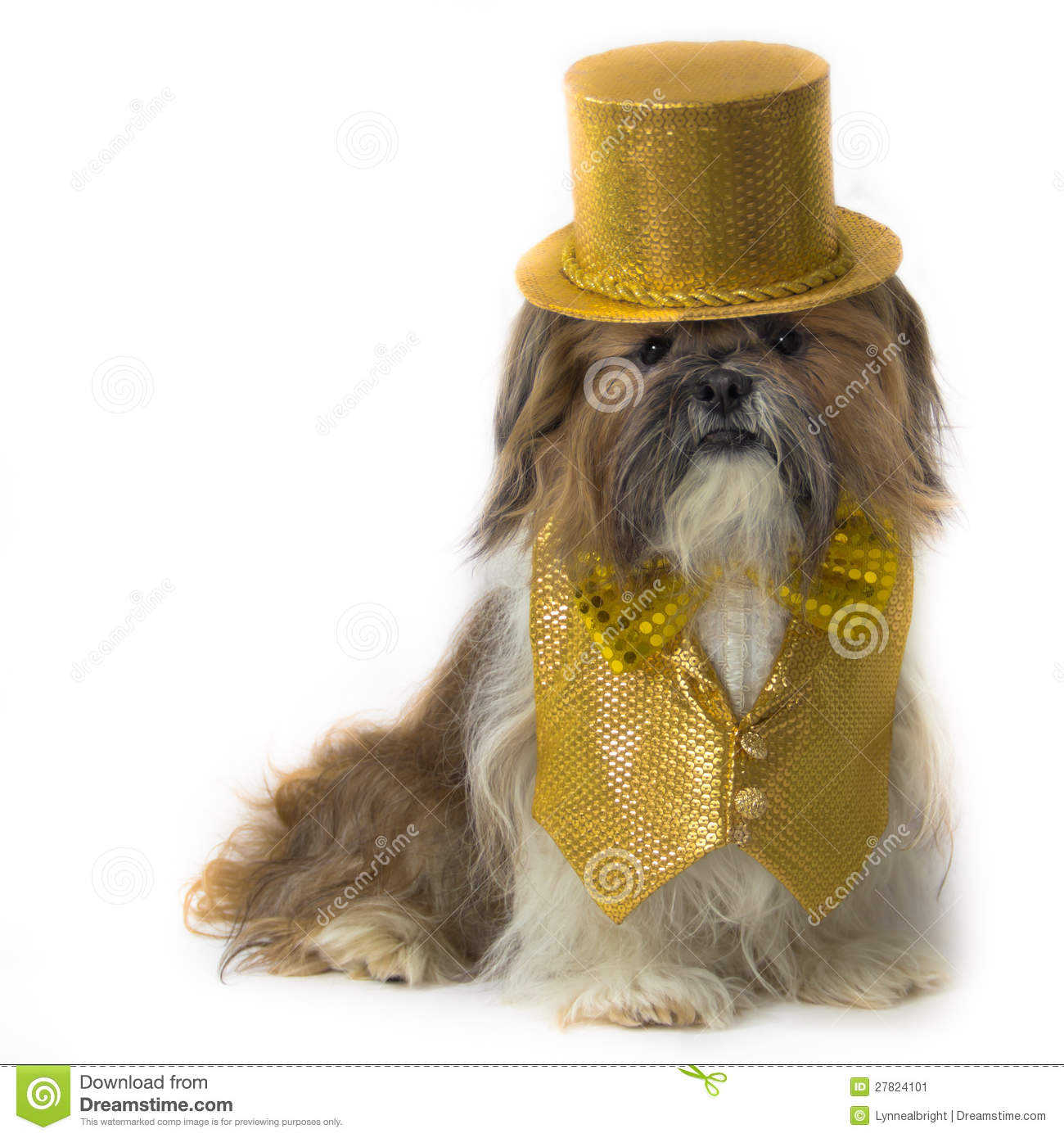 Shih Tzu In A Gold Fancy Costume Stock Image Image 27824101