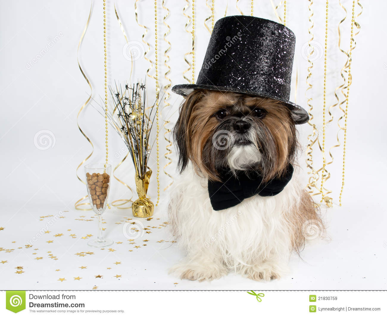 Shihtzu Stock Images - Download 1,423 Royalty Free Photos  |Shitzu Puppies New Years Eve