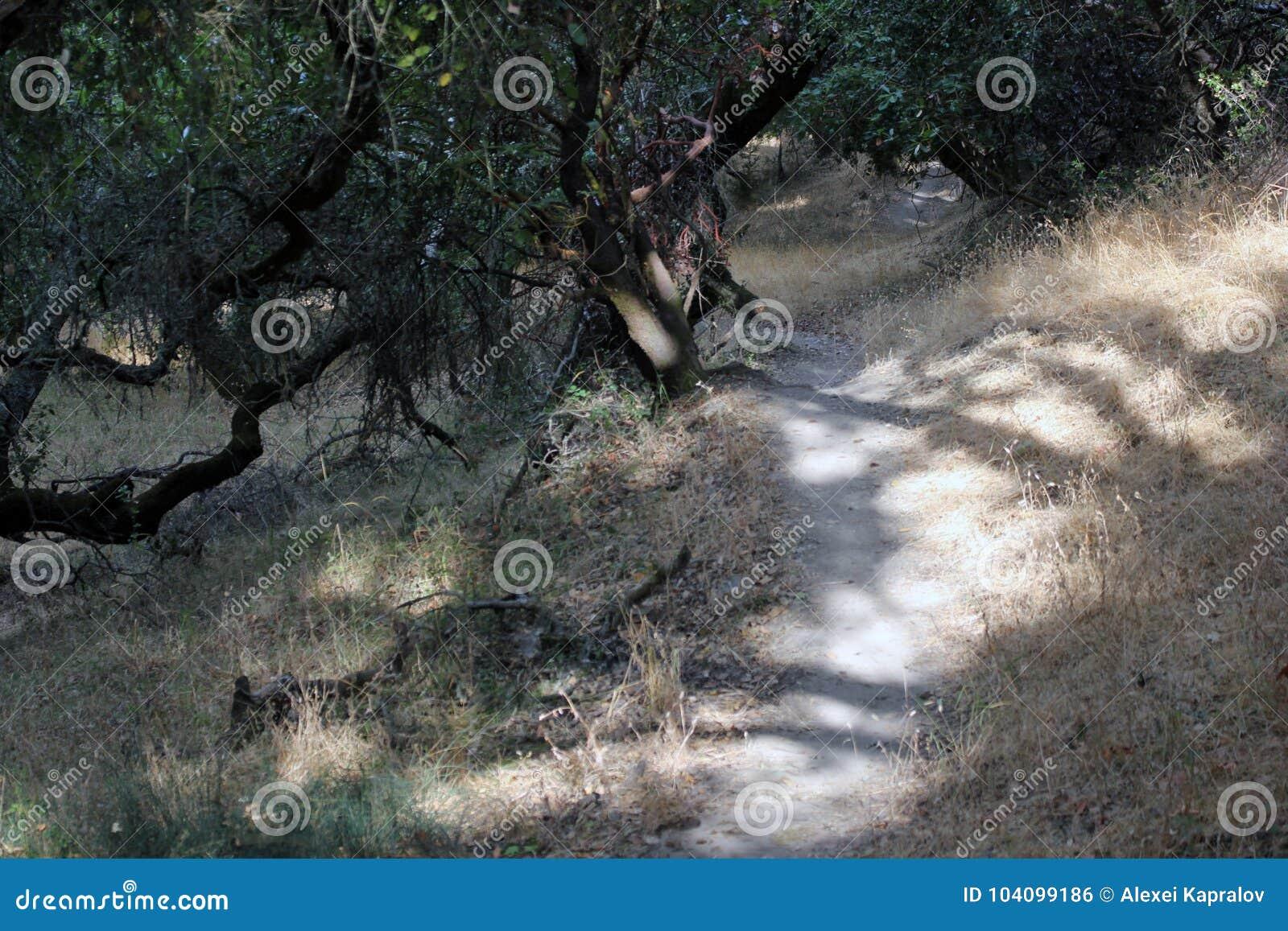 Shiloh Ranch Regional The-het park omvat eiken bossen, bossen van gemengd evergreens, randen met vegende meningen van Santa Rosa