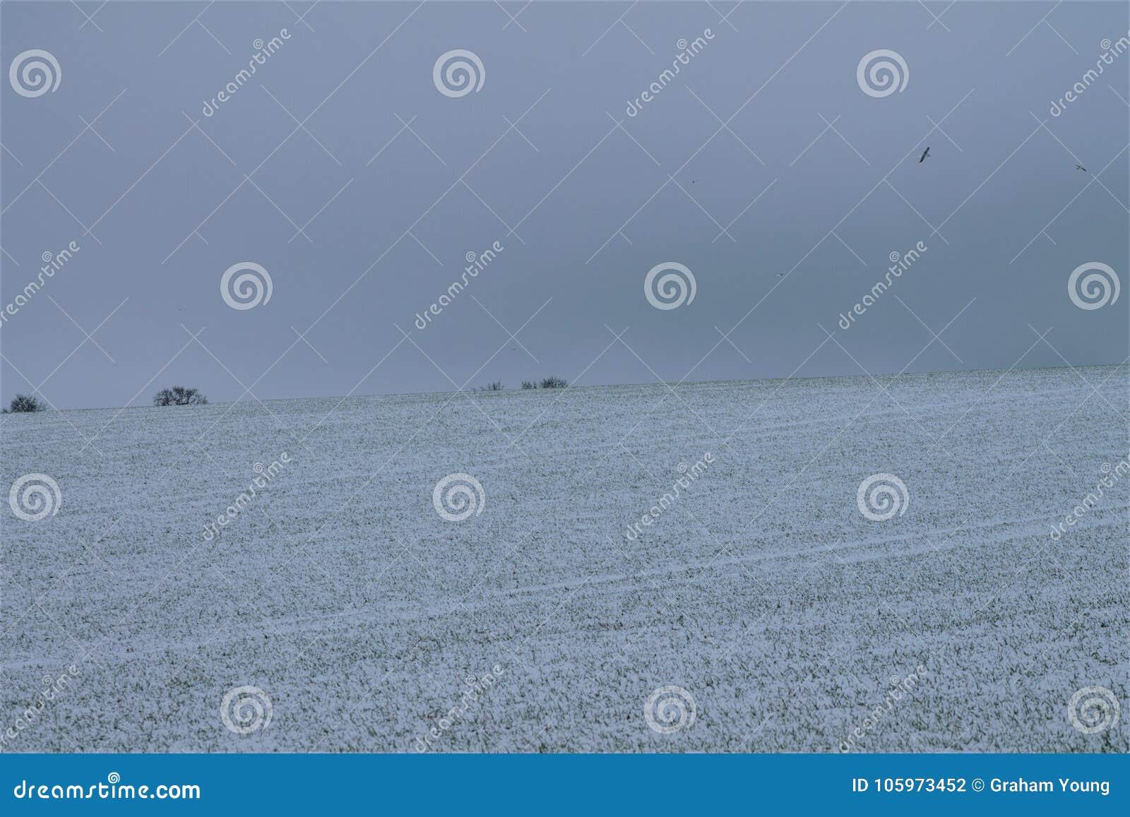 Shimplings-Suffolk im Schnee