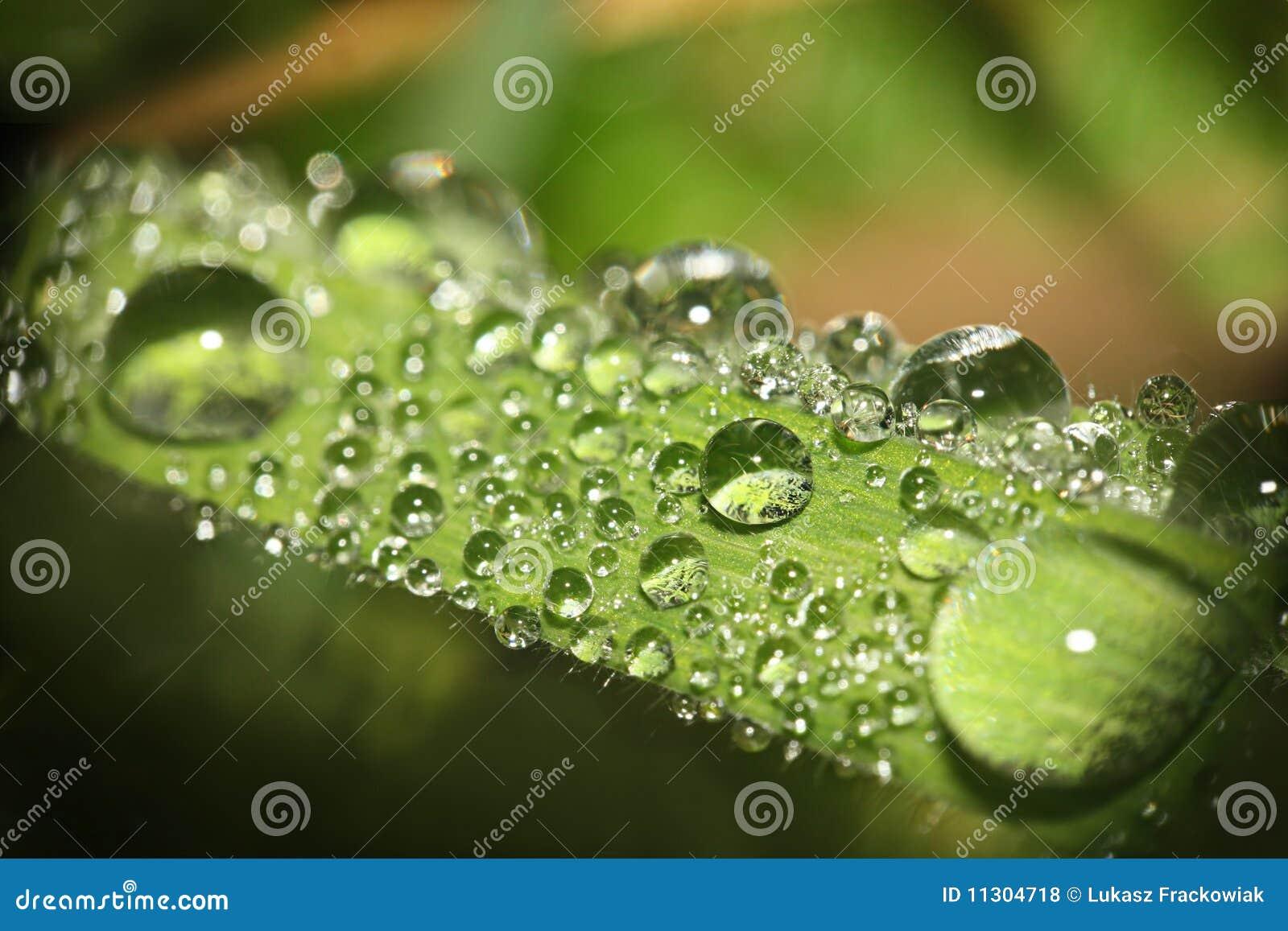 Shinewassertropfen