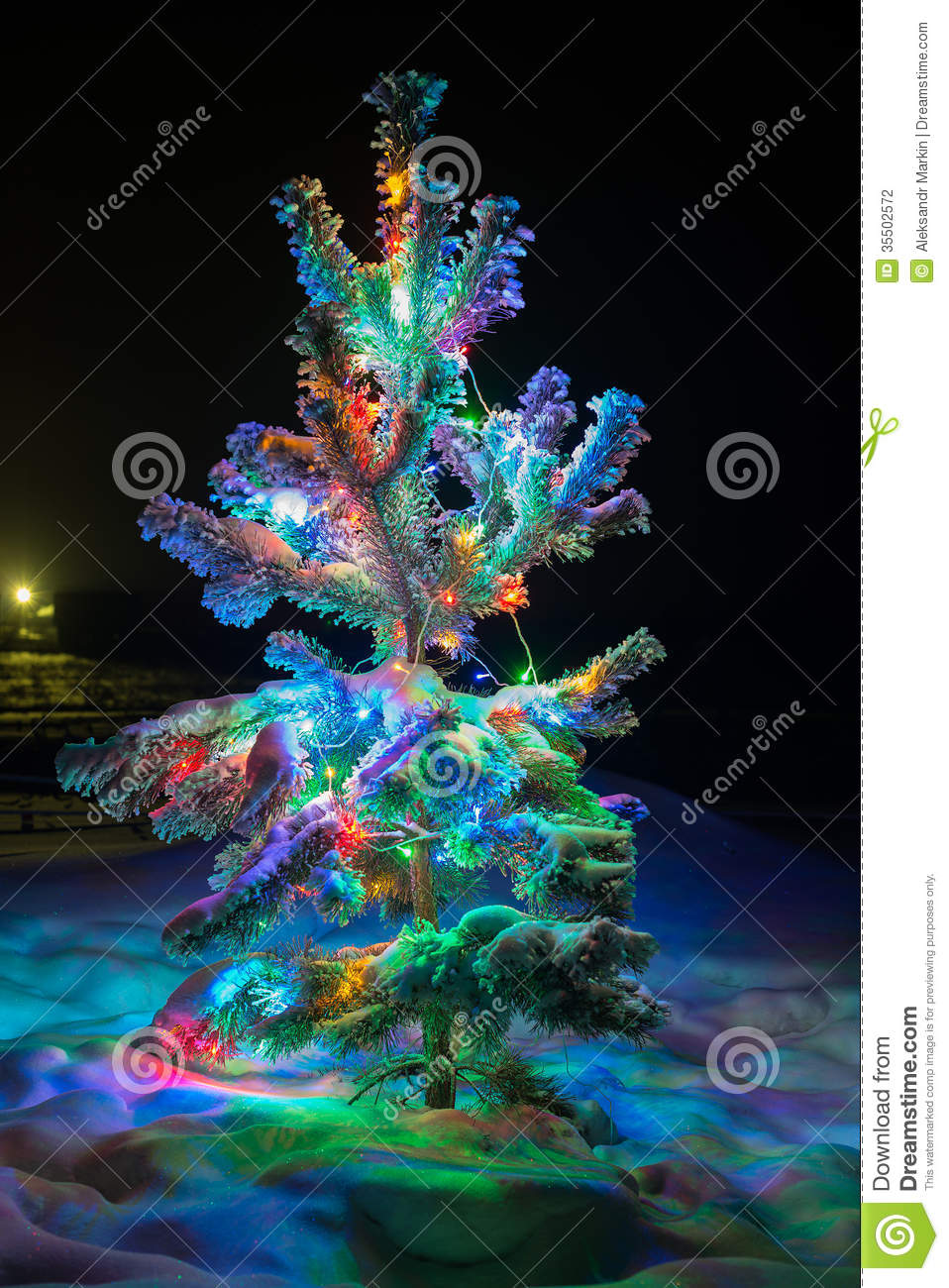 Shining Lights Of A Natural Christmas Tree Covered Snow