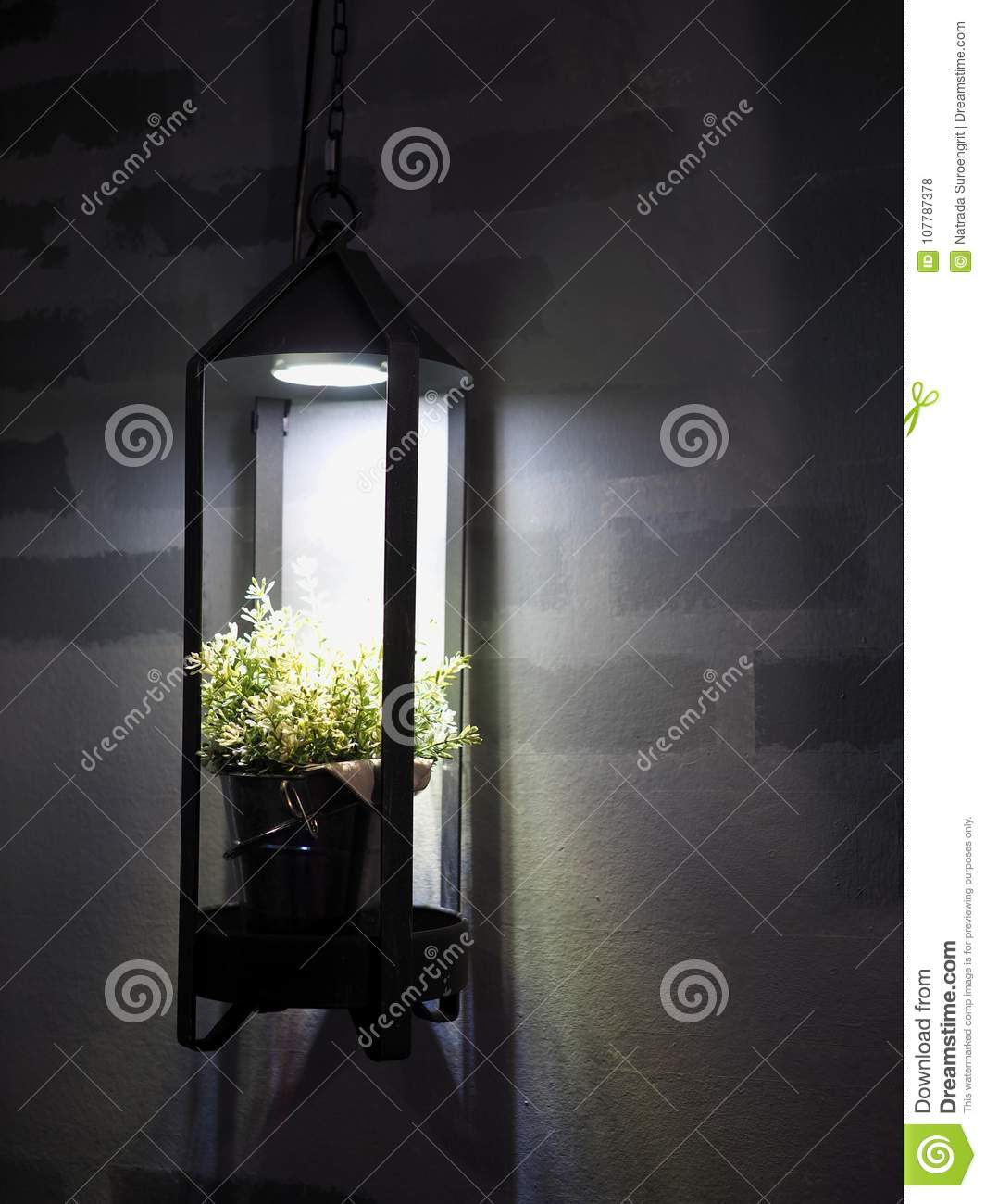 Shiny In The Dark Stock Photo Image Of Nature Background 107787378