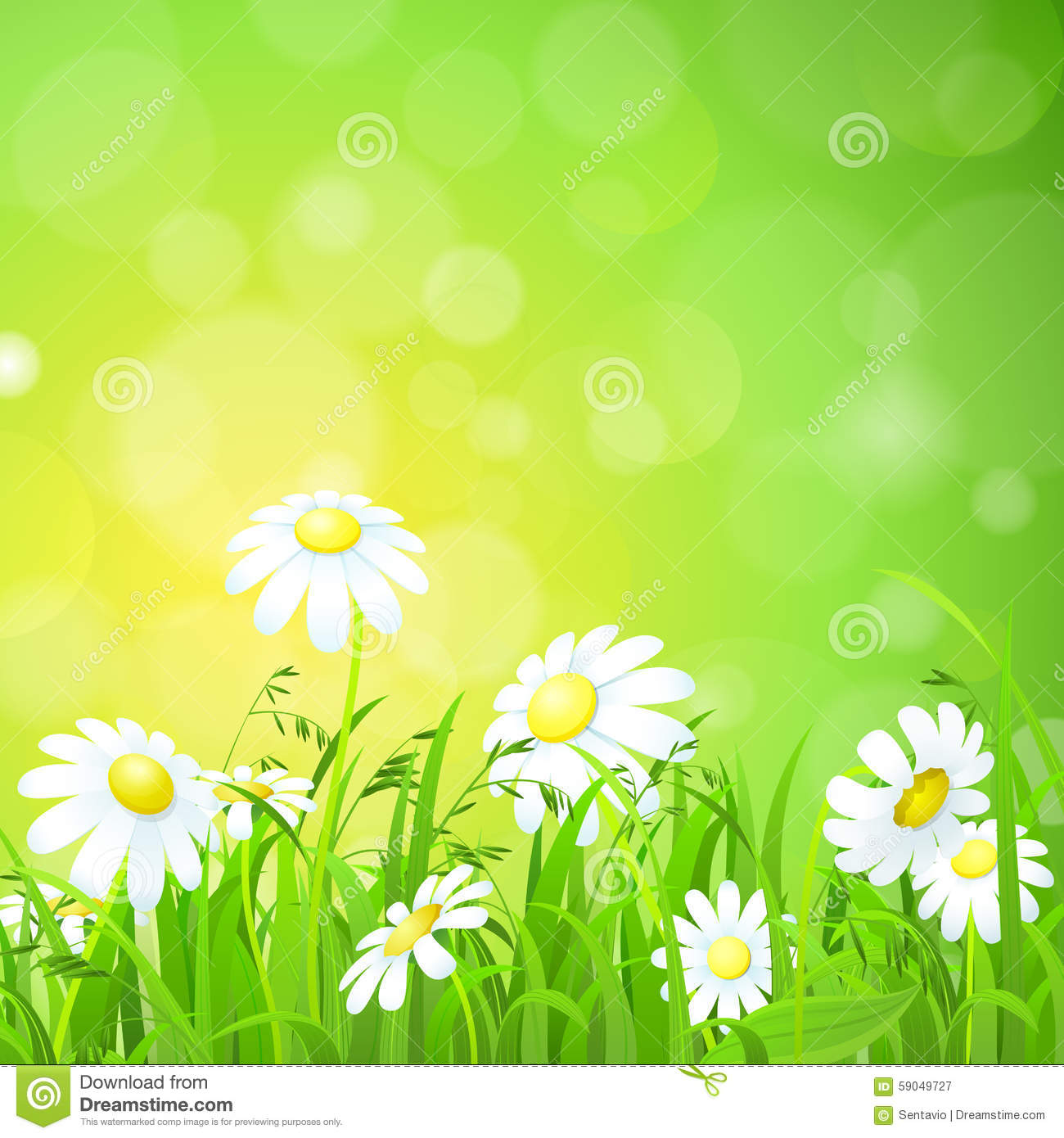 Shiny Grass Lawn And Chamomile Flat Vector Background