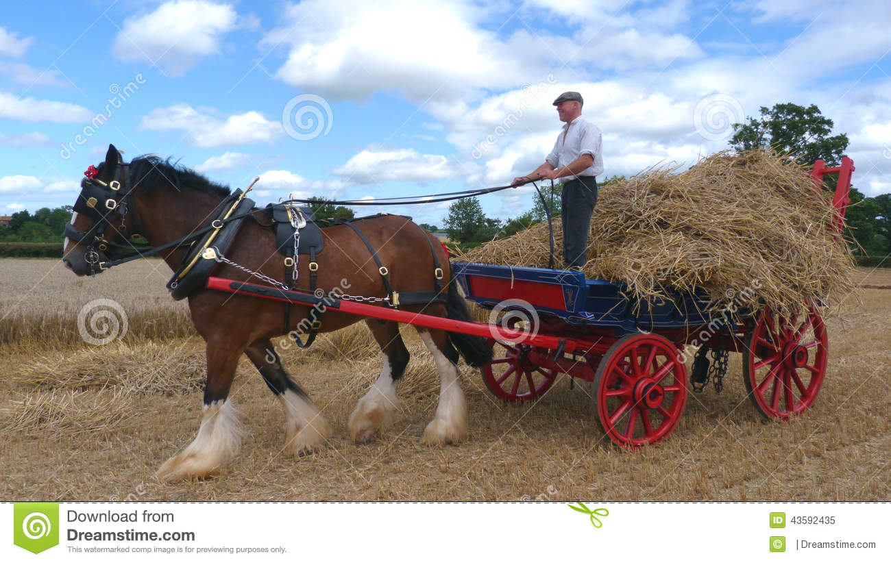 Shire Horse At A Working Day Country Show In England Editorial Image ...