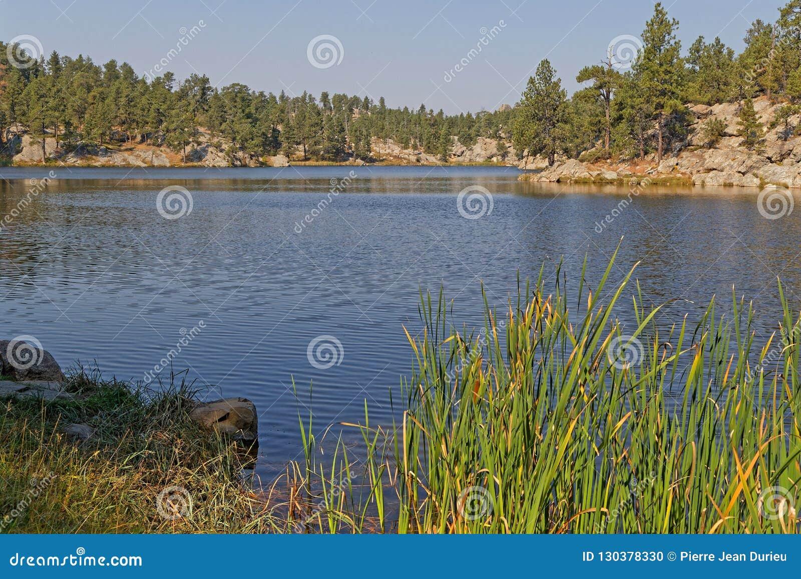 Shireline van het Bismarkmeer in Custer Park