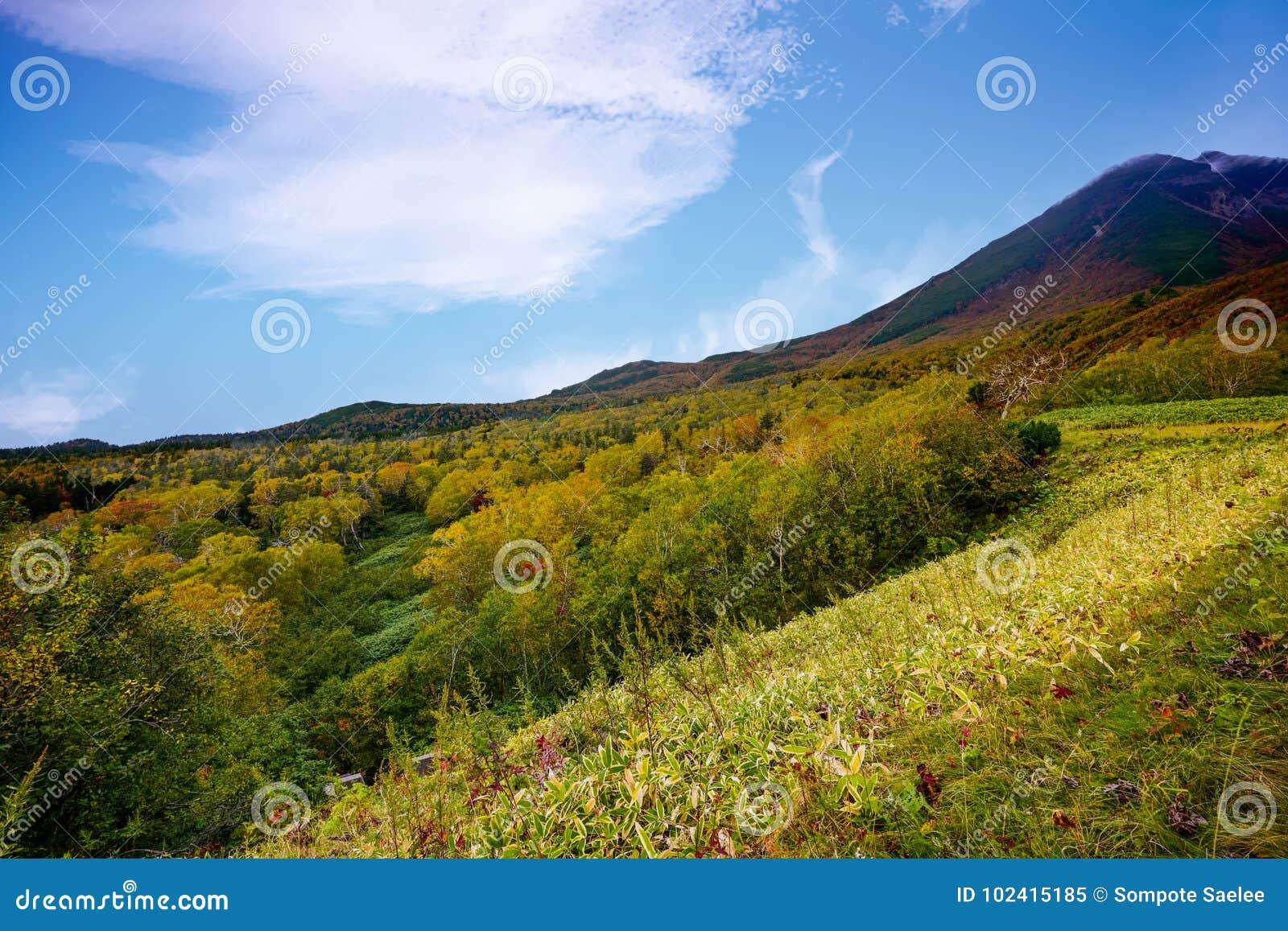 Shiretokopas in de Herfst