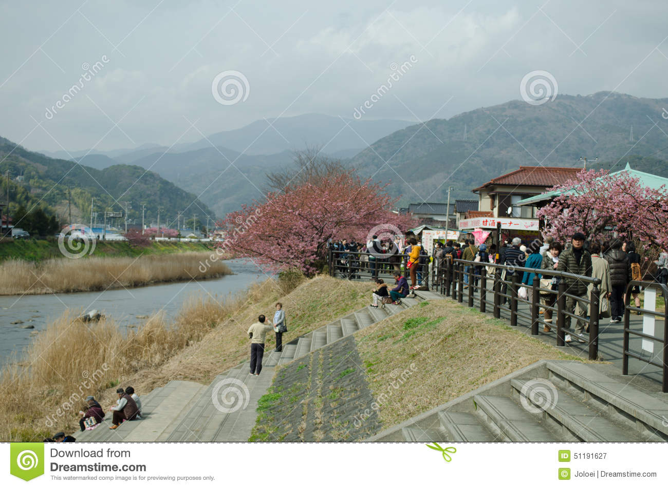 Shizuoka Japan  city photo : SHIZUOKA, JAPAN FEBRUARY 24 : Tourists are visiting the cherry ...