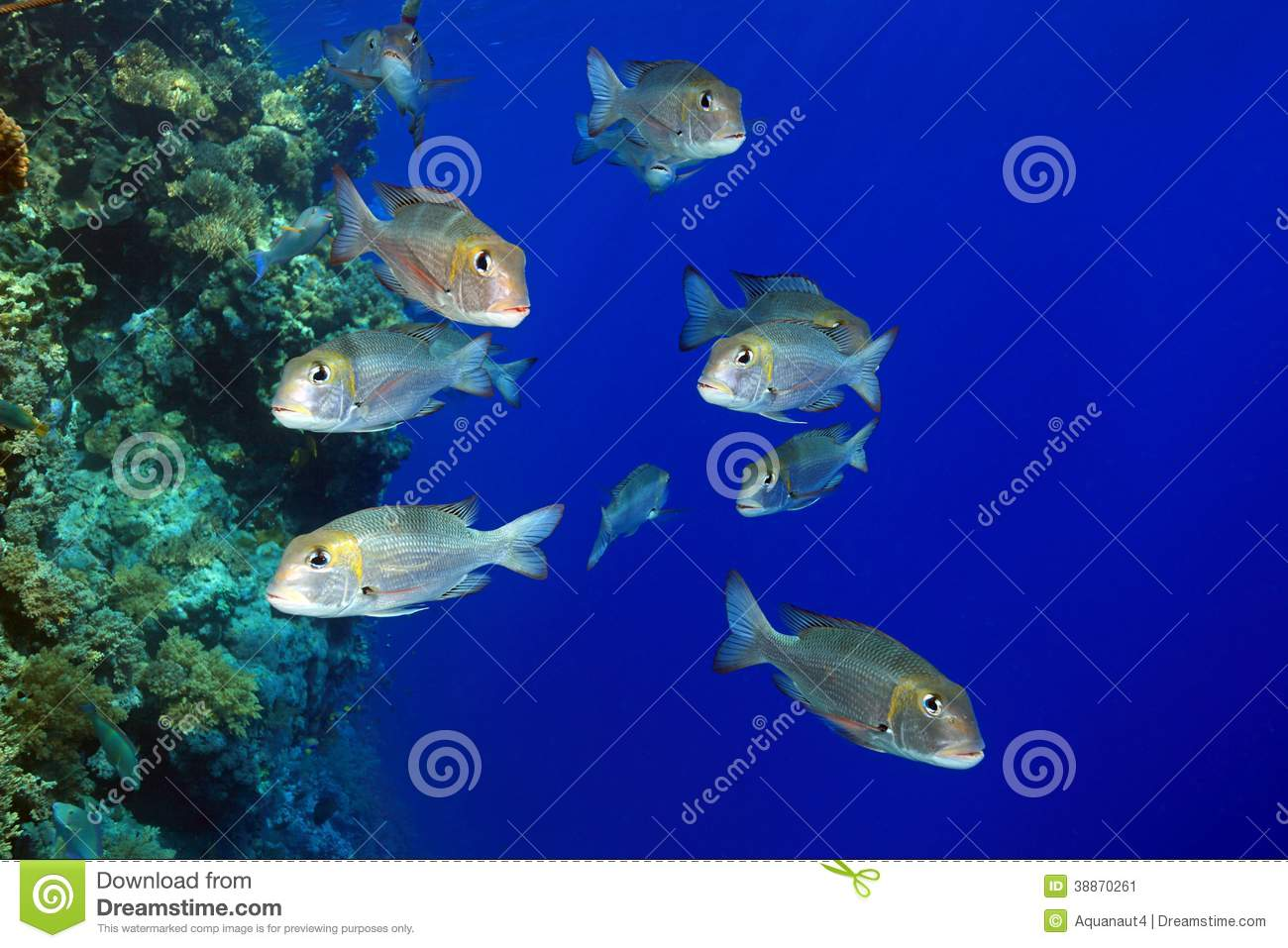 "fish shoaling behavior and the role Introduction shoaling is a widely important mechanism used by fish in freshwater and marine environments although used rather loosely in conjunction with the term ""schooling,"" the two words differ in definition by nature of organization."