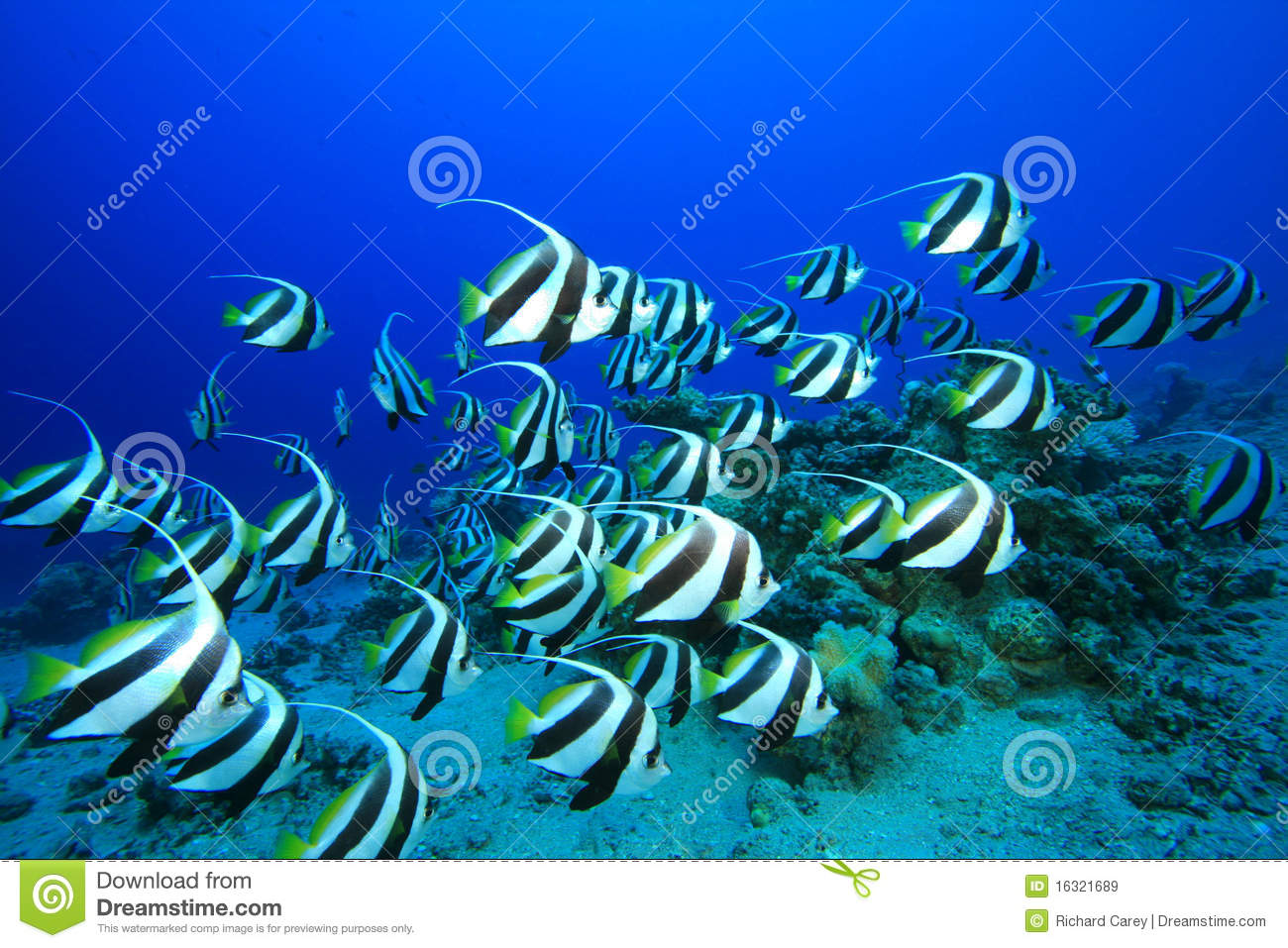 Shoal Of Fish Royalty Free Stock Images - Image: 16321689