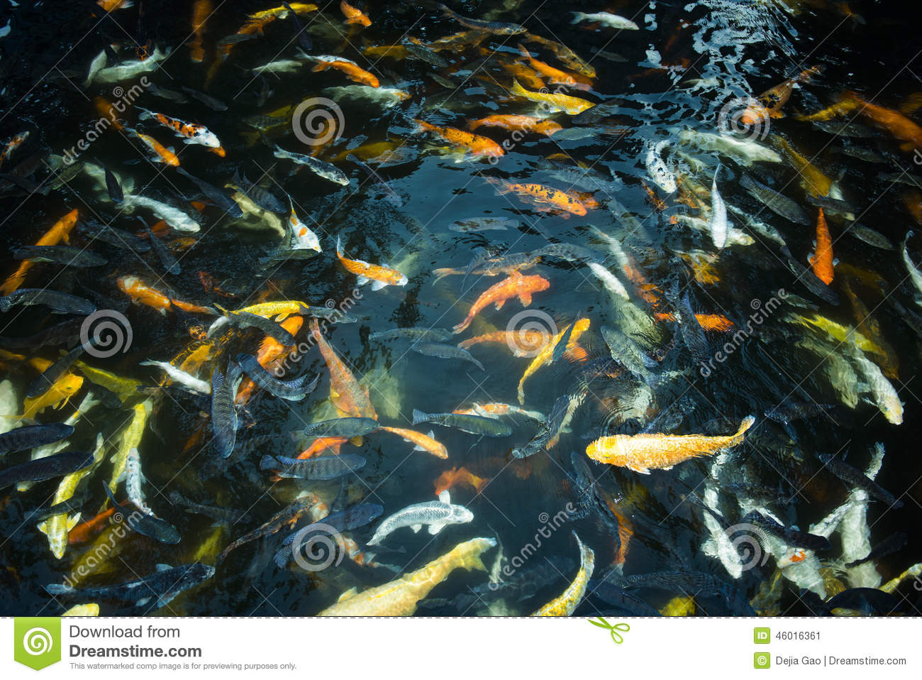 Goldfish stock image image of fish green mere garden for Surface fish ponds