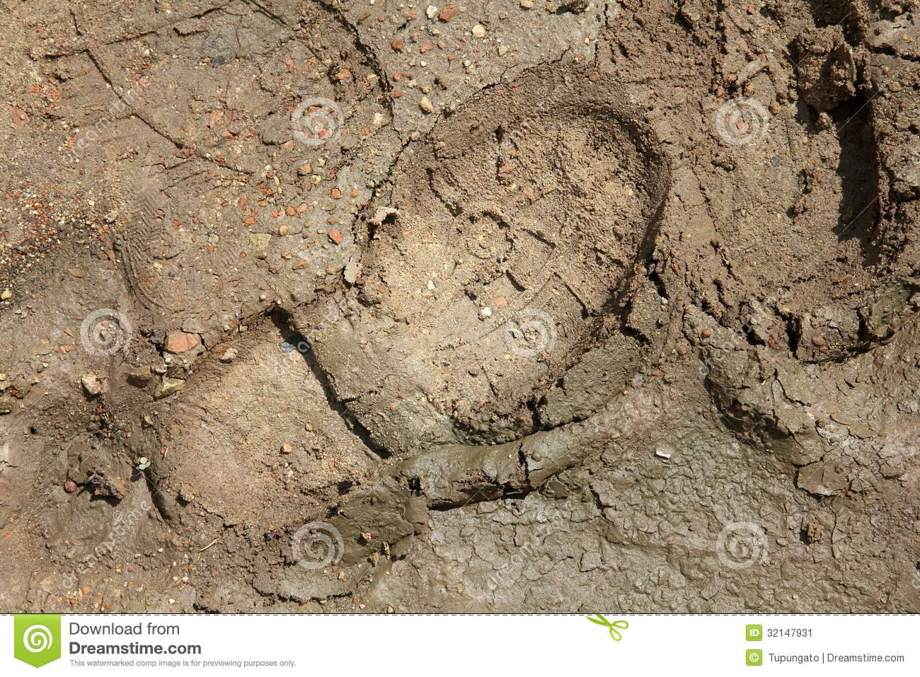 shoeprint in mud stock image  image of traces  texture