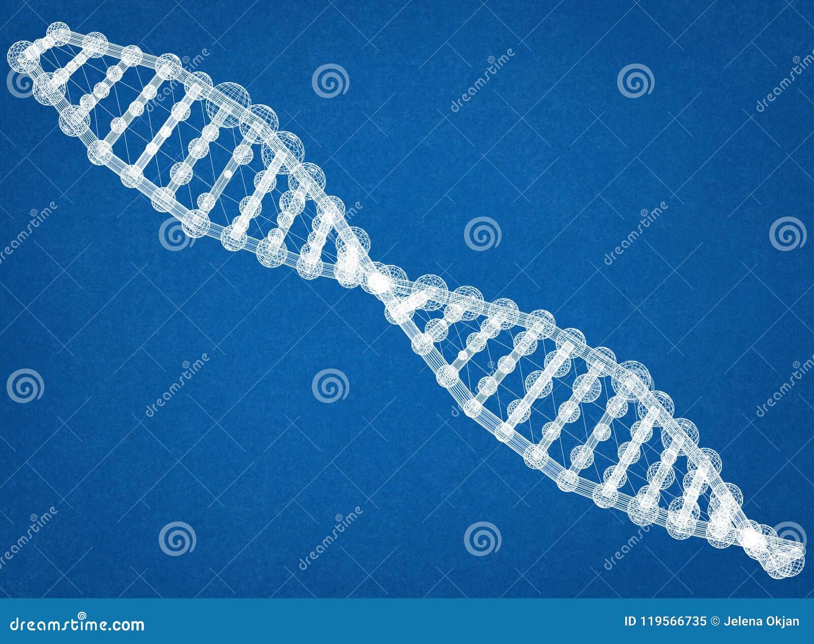 DNA Architect Blueprint stock image  Image of code, gene - 119566735