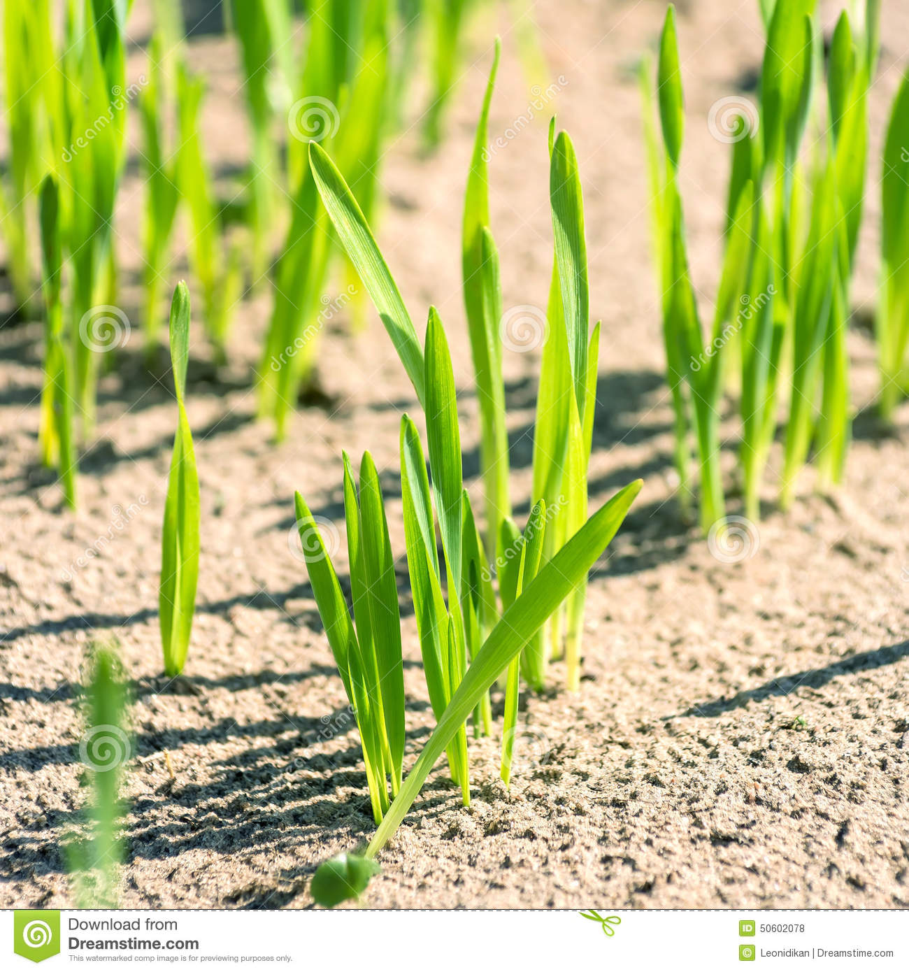 Soil with small shoots royalty free stock photo for Soil young s modulus