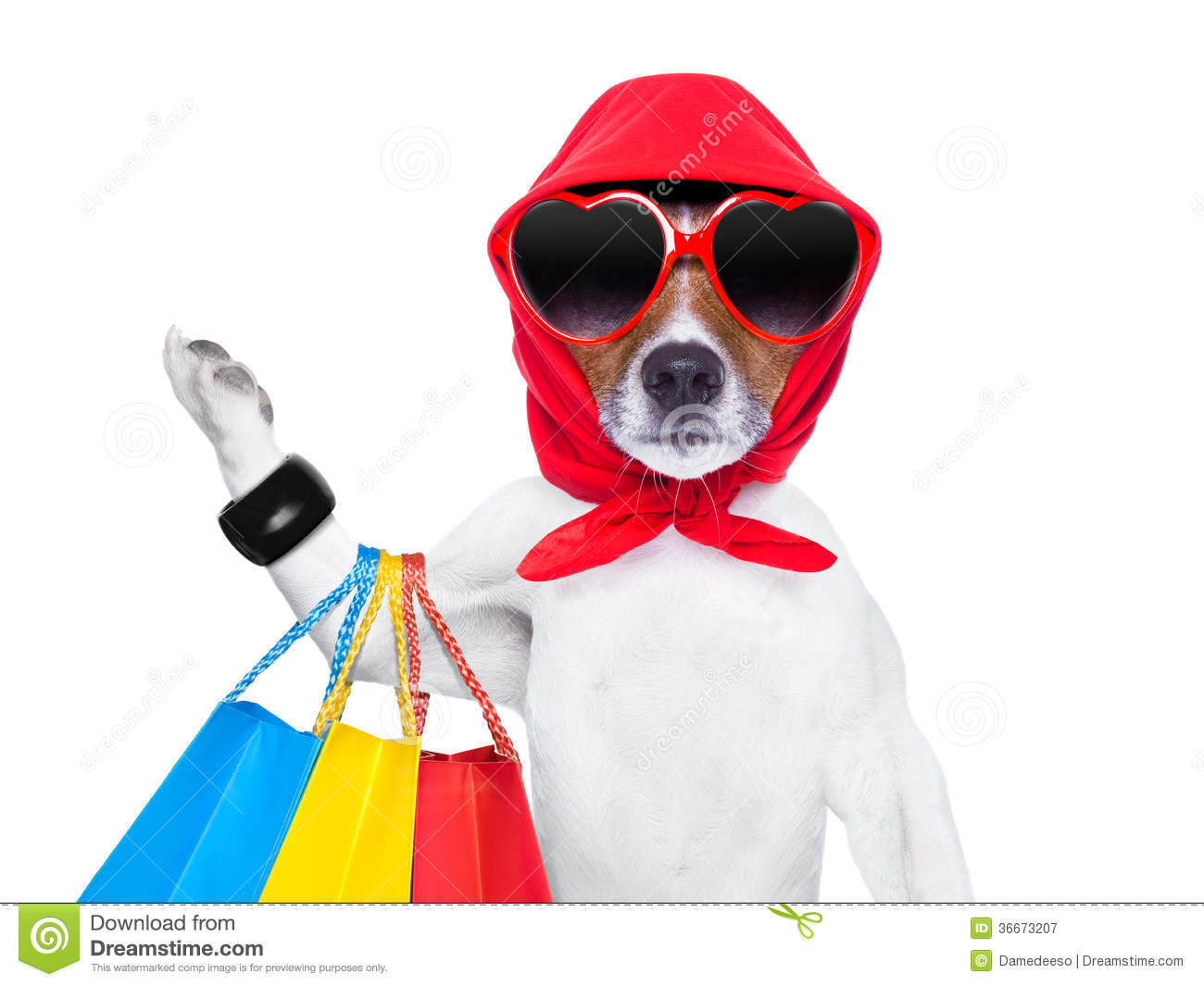 Shopaholic diva dog royalty free stock photography image for How to be a professional shopper