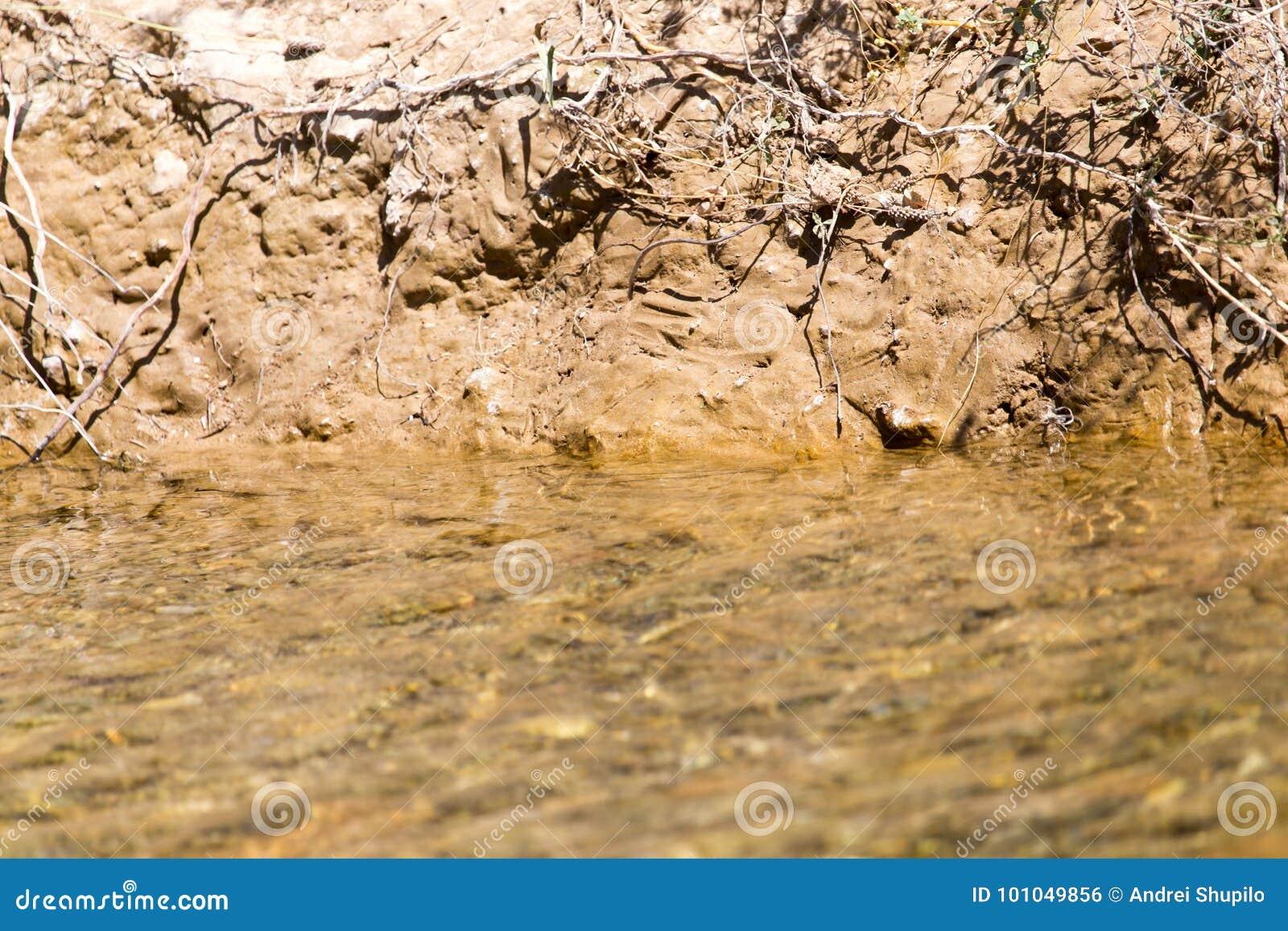 Shore of a small river