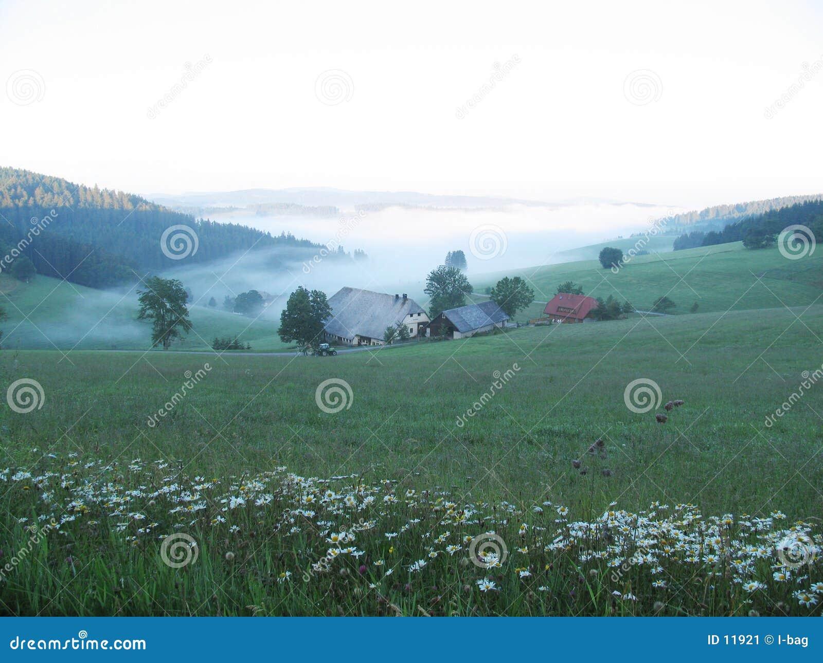 Short della fattoria prima di alba