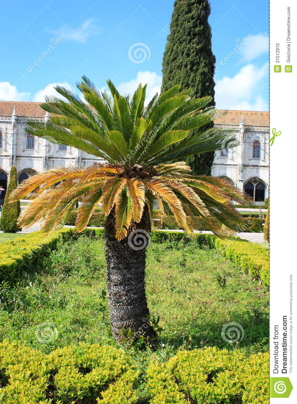 Short palm tree in the middle of the city in Belem, Portugal.