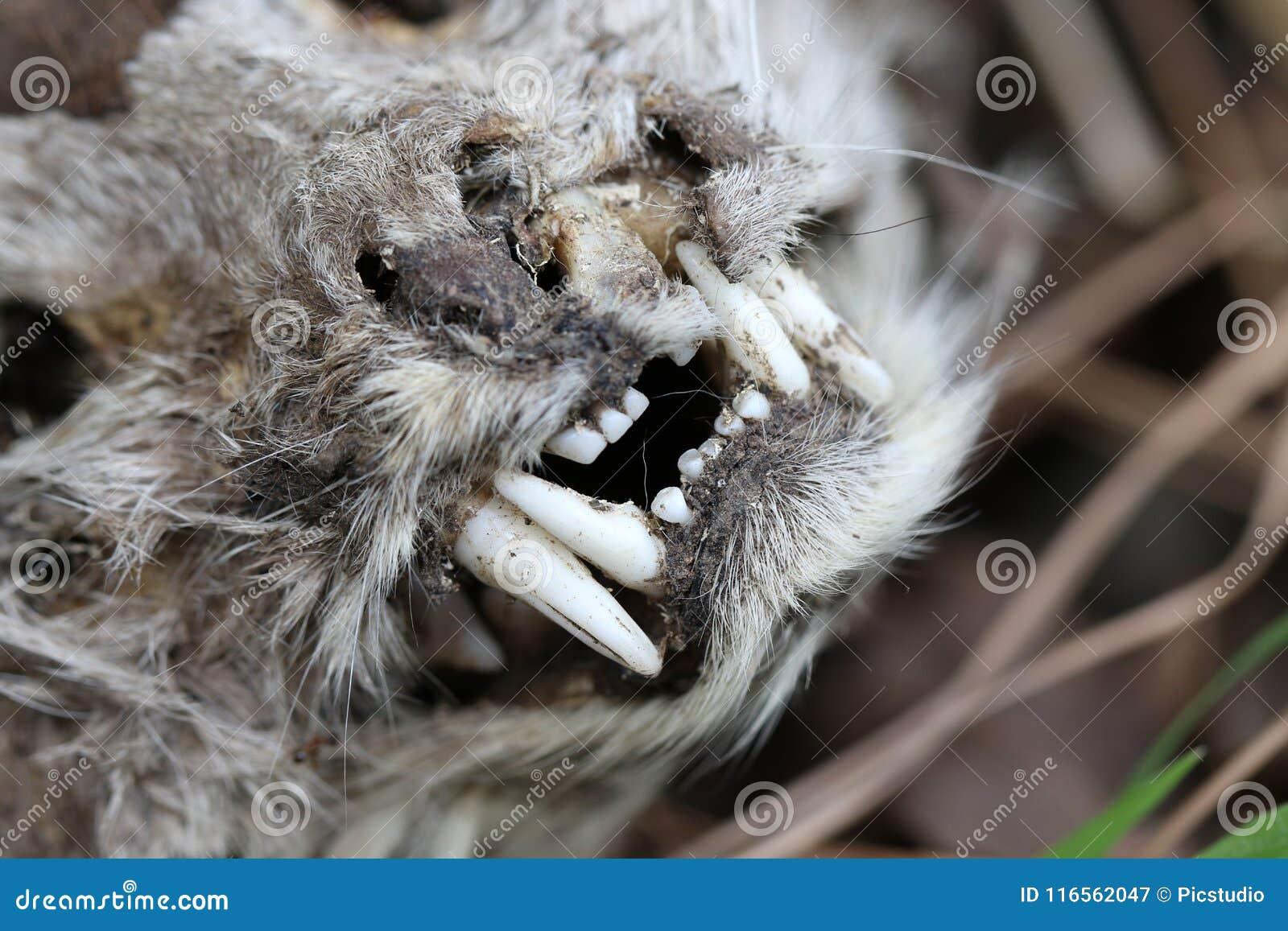 Cat face skeleton
