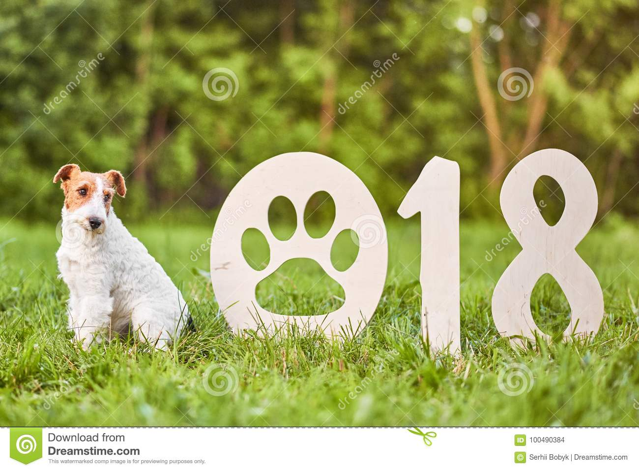Adorable happy fox terrier dog at the park 2018 new year greetin
