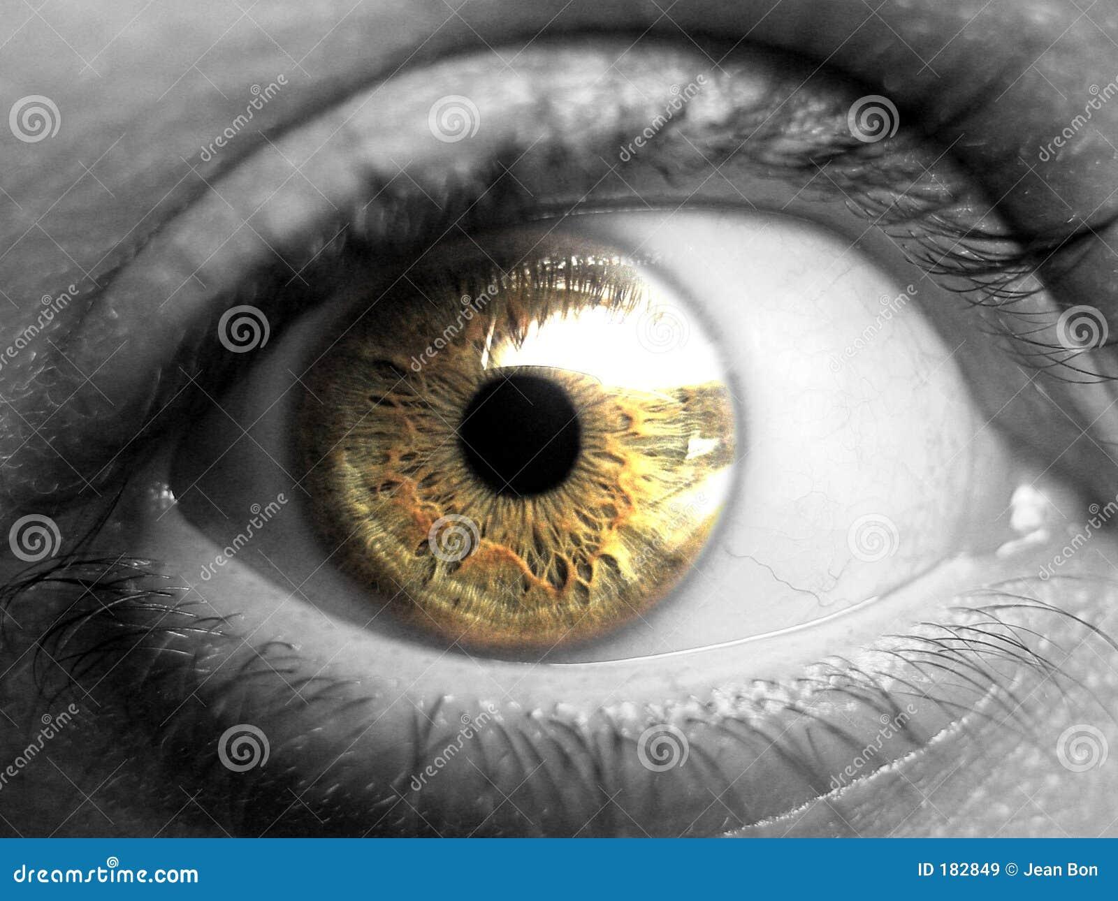 Shot of golden eye