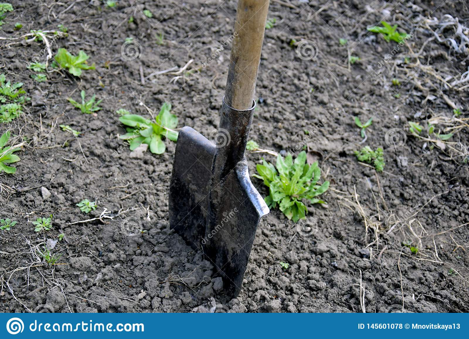 Shovel stuck in the ground in the garden area