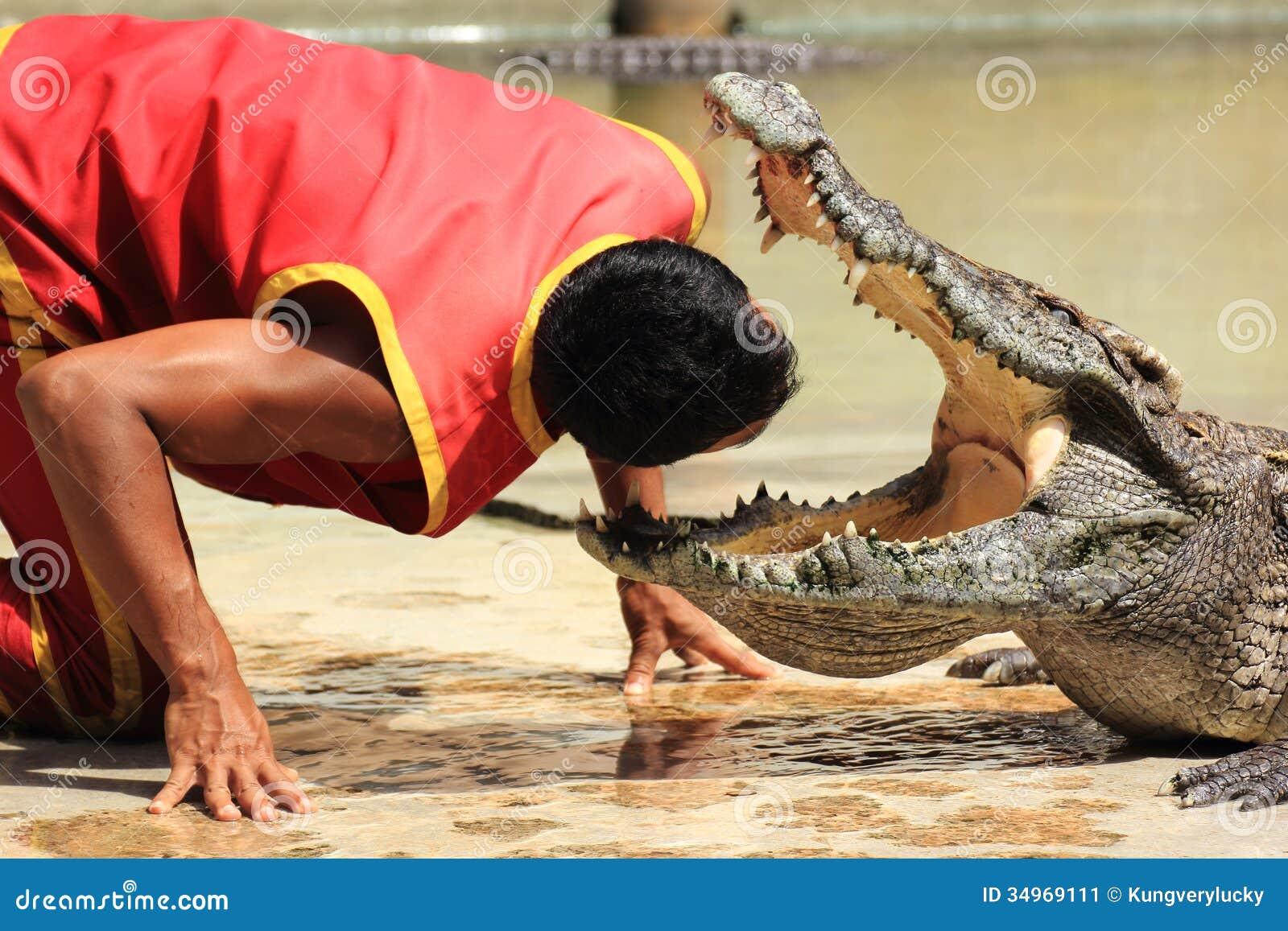 Show av krokodiler/huvud in i käkarna av en krokodil