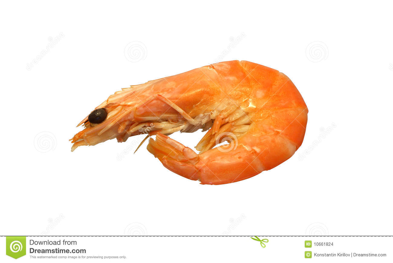 Shrimp Stock Images - Image: 10661824
