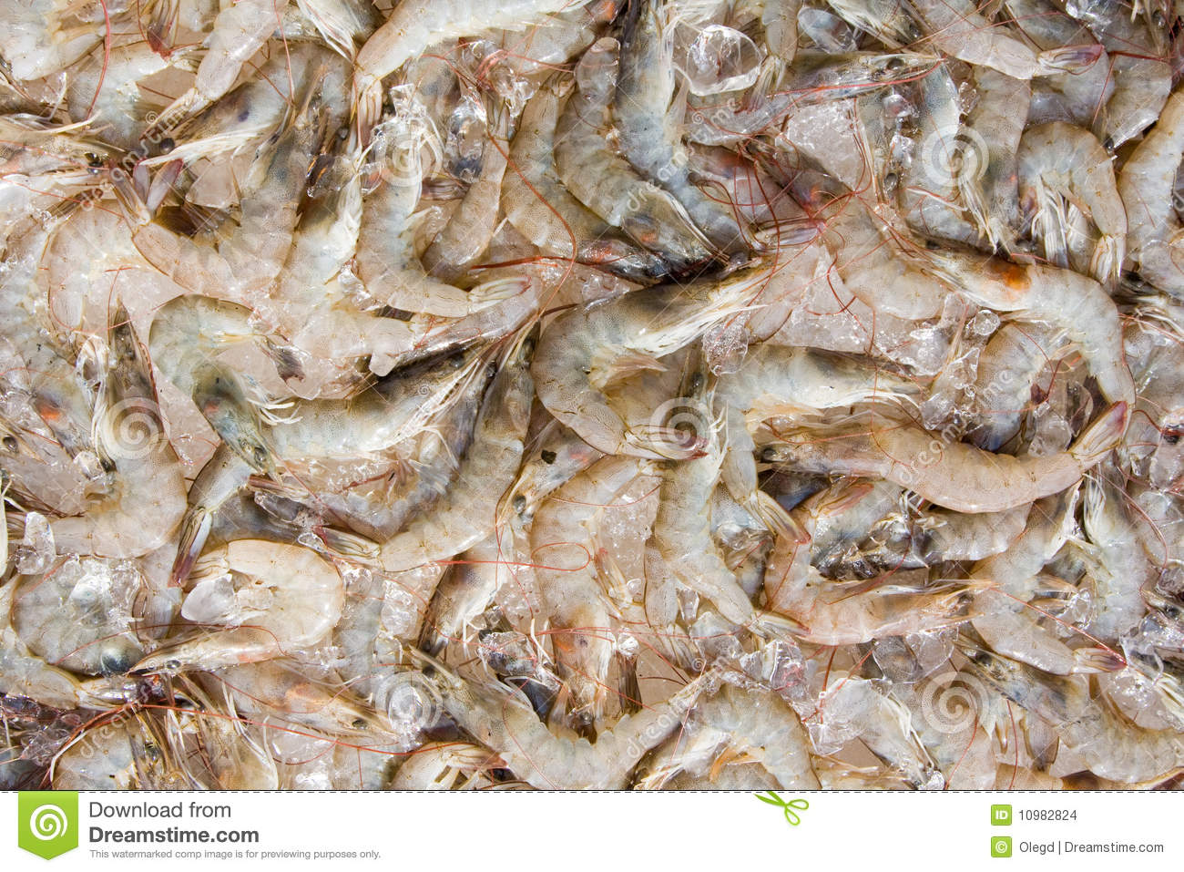 Shrimp Stock Images - Image: 10982824