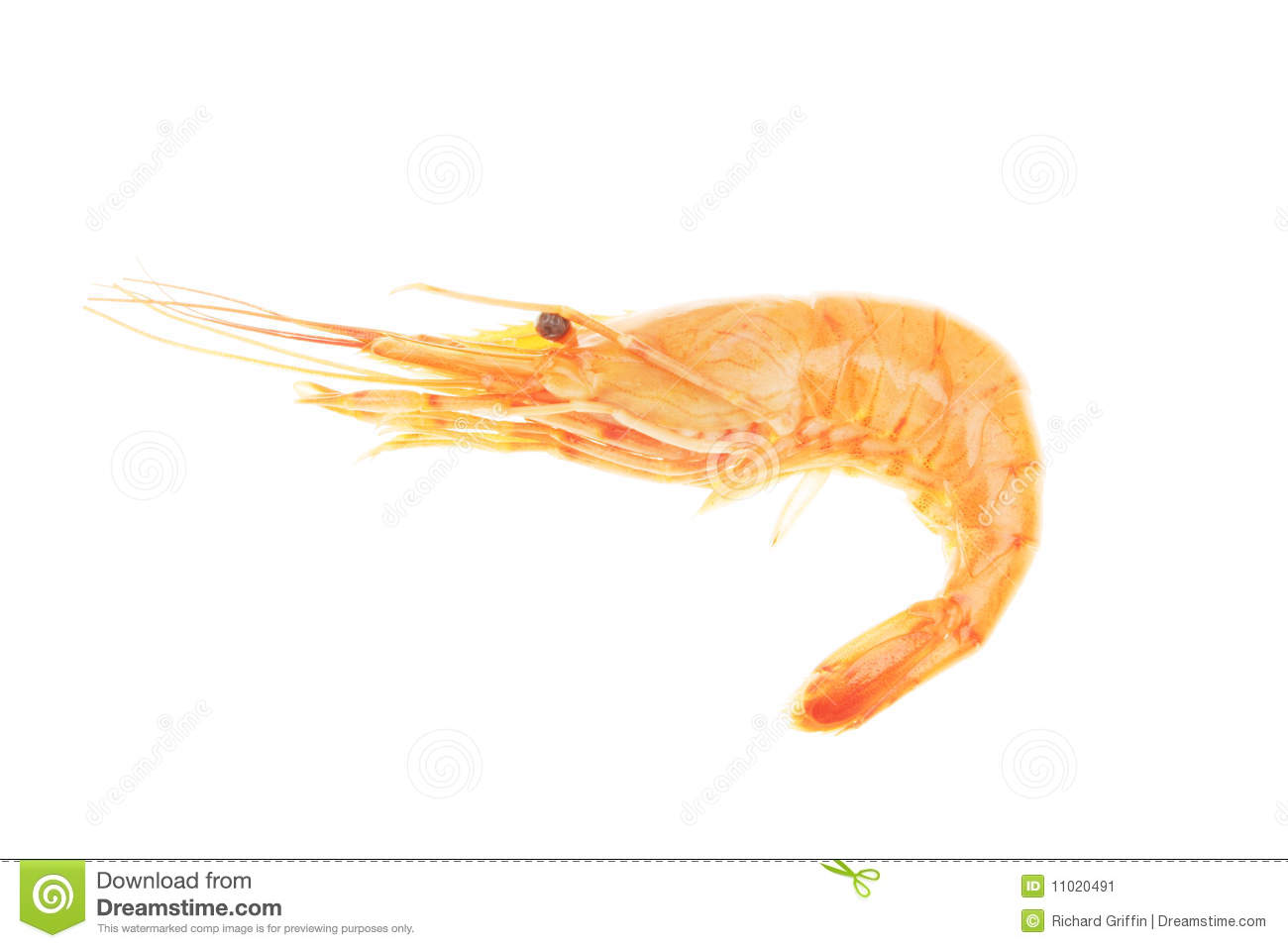 Shrimp Stock Image - Image: 11020491