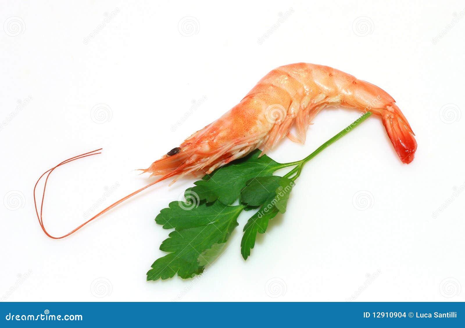 Shrimp Stock Images - Image: 12910904