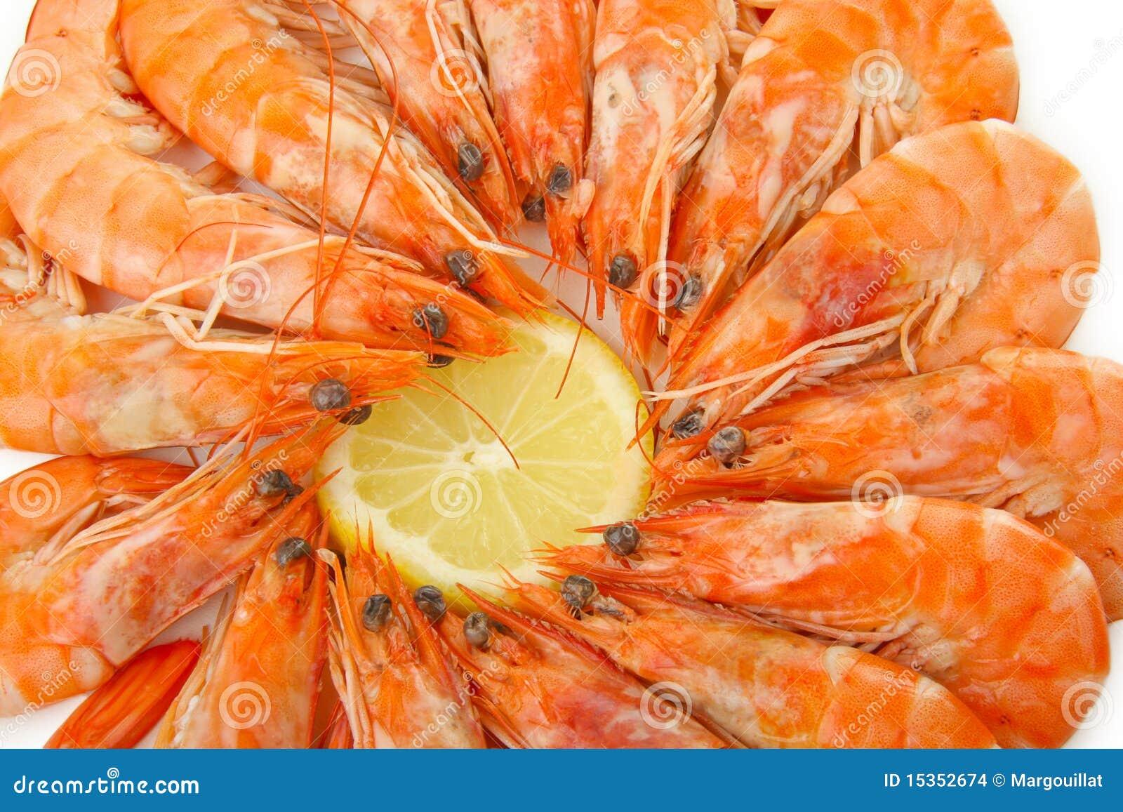 Shrimp Stock Images - Image: 15352674