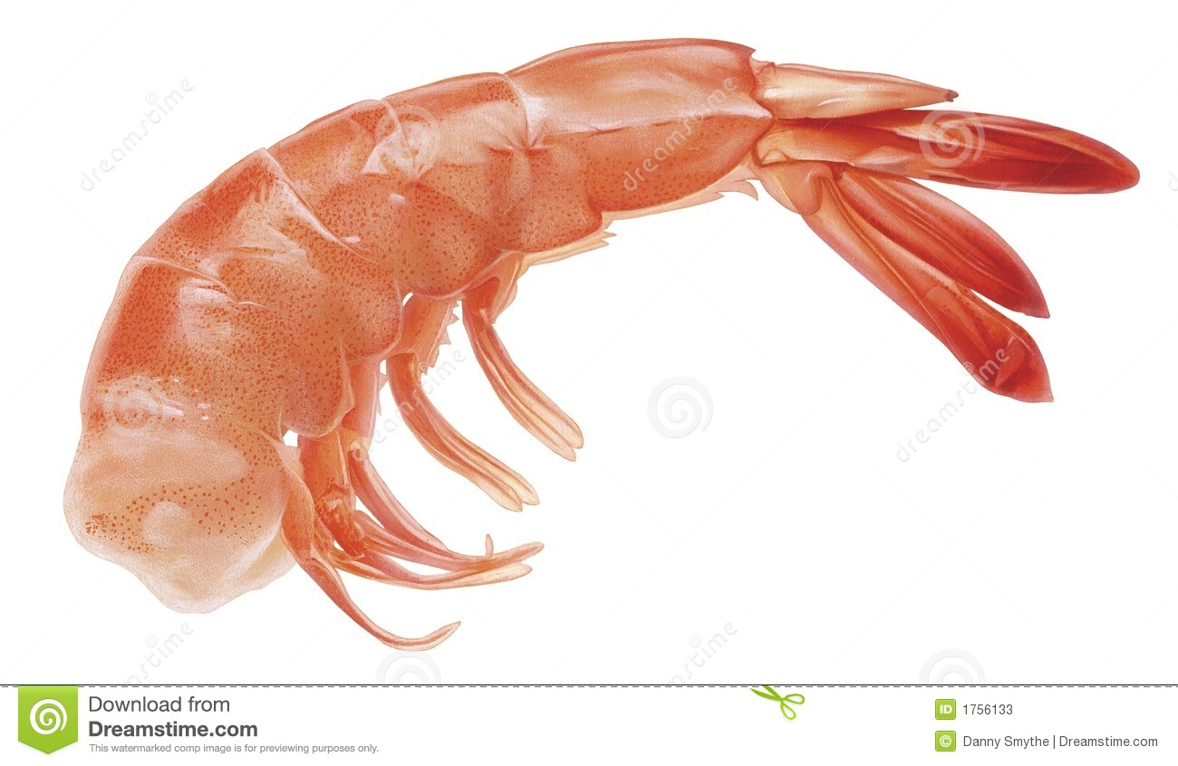 Shrimp Stock Photos - Image: 1756133