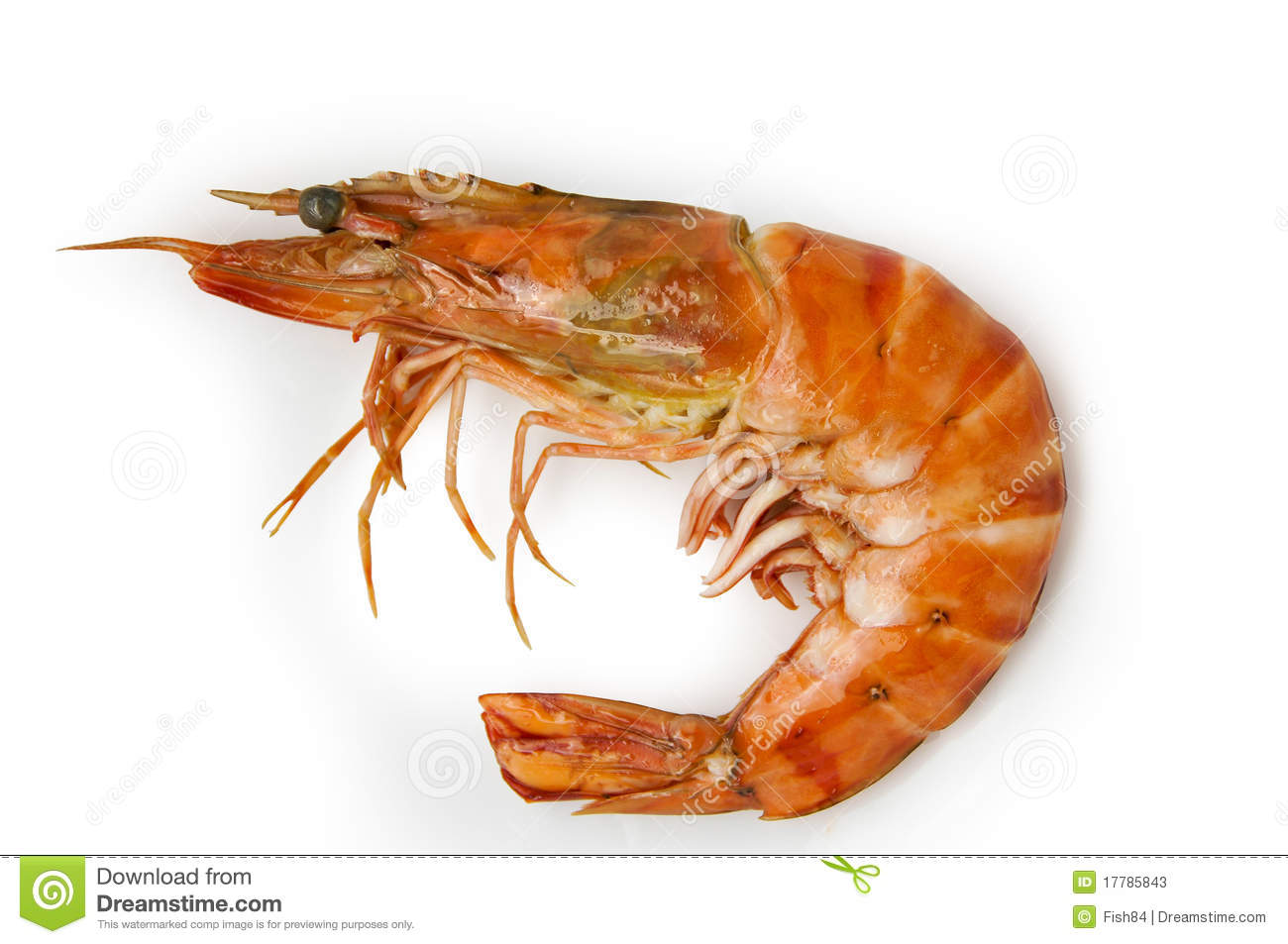 Shrimp Stock Photos - Image: 17785843