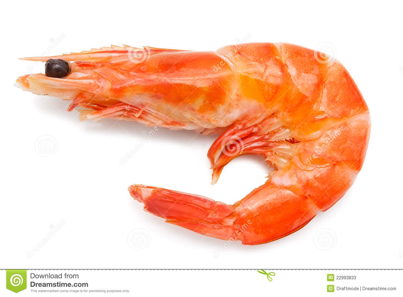 Shrimp Stock Photos - Image: 22993833