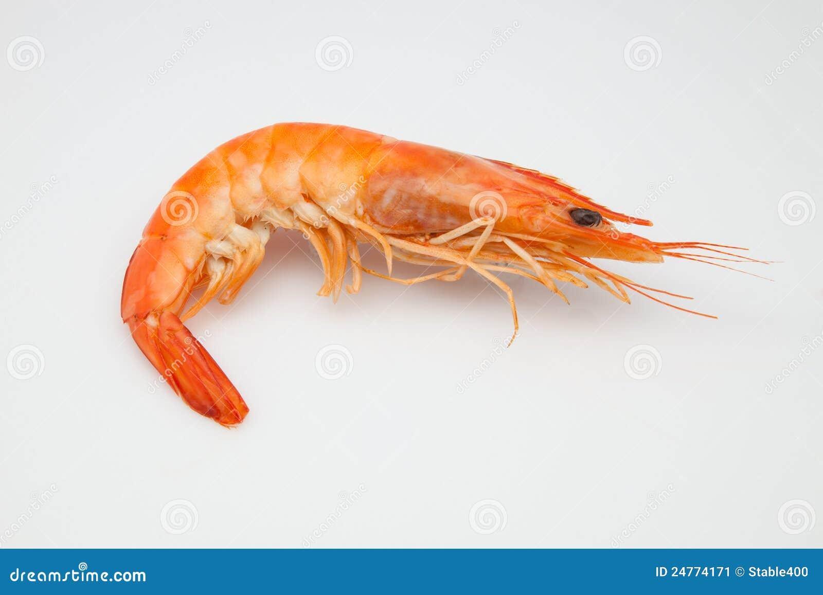 Shrimp Stock Image - Image: 24774171