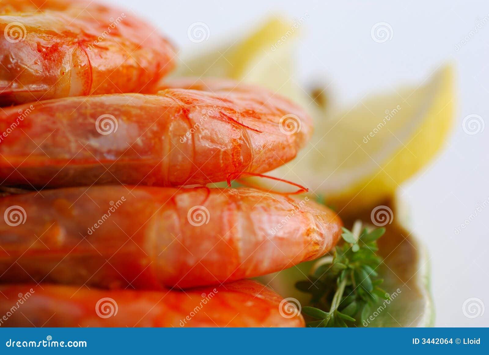 Shrimp Stock Images - Image: 3442064