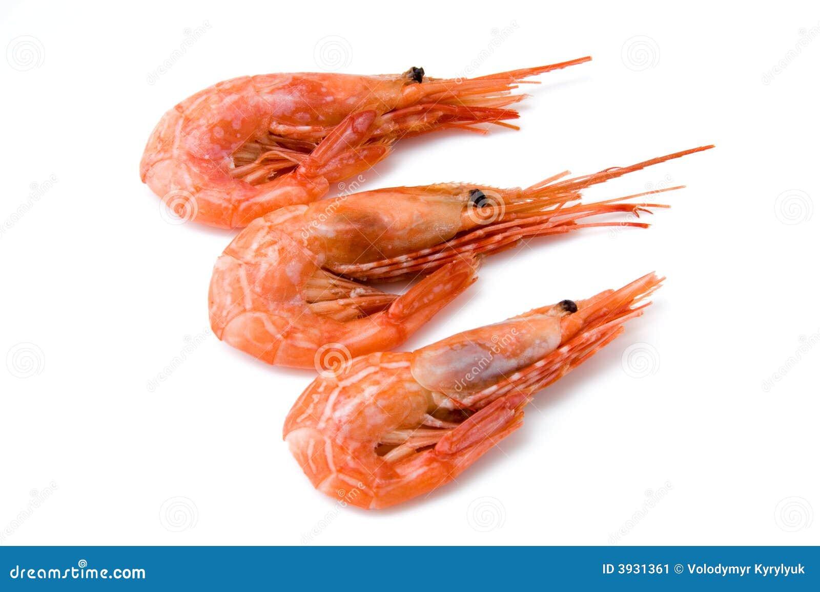 Shrimp Stock Image - Image: 3931361