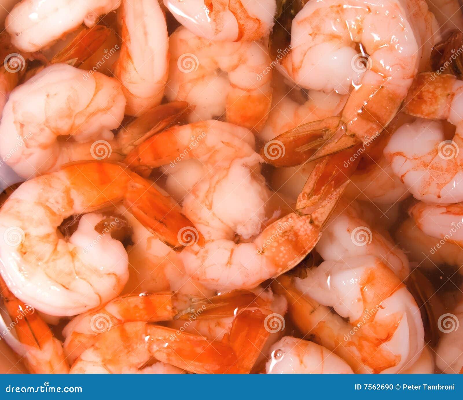 Shrimp Stock Photo - Image: 7562690