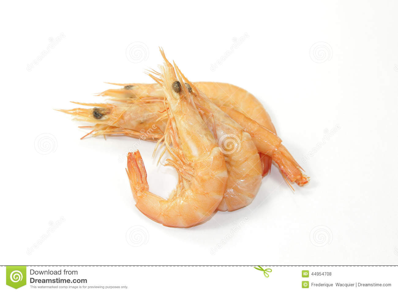 Shrimp Stock Photo - Image: 44954708