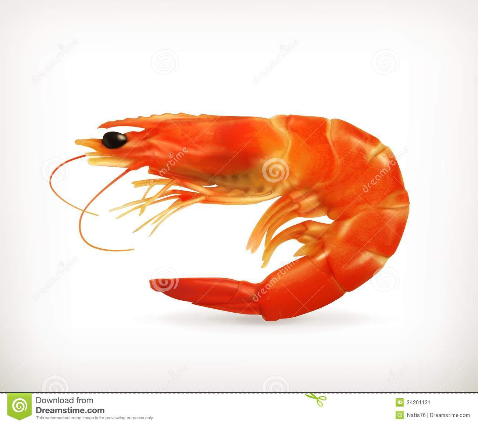 Shrimp Stock Image - Image: 34201131