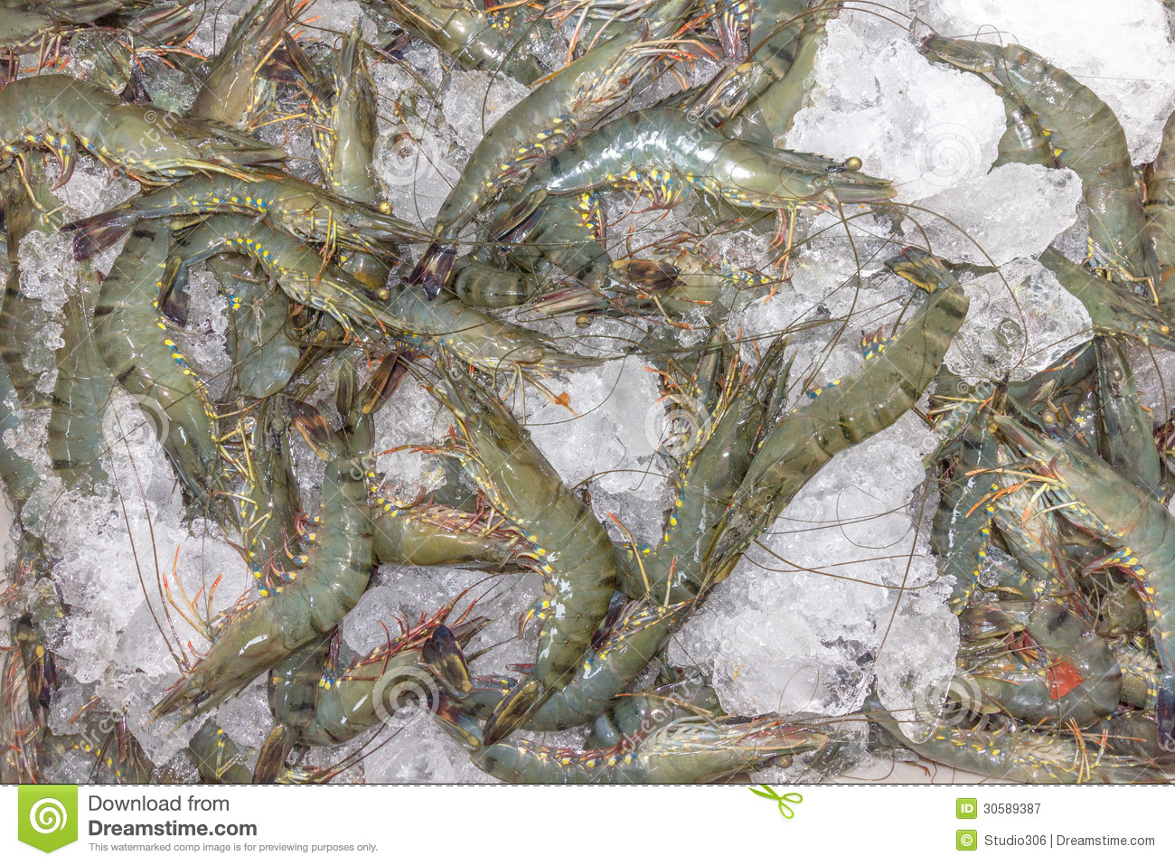 Shrimp Stock Royalty Free Stock Photography - Image: 30589387