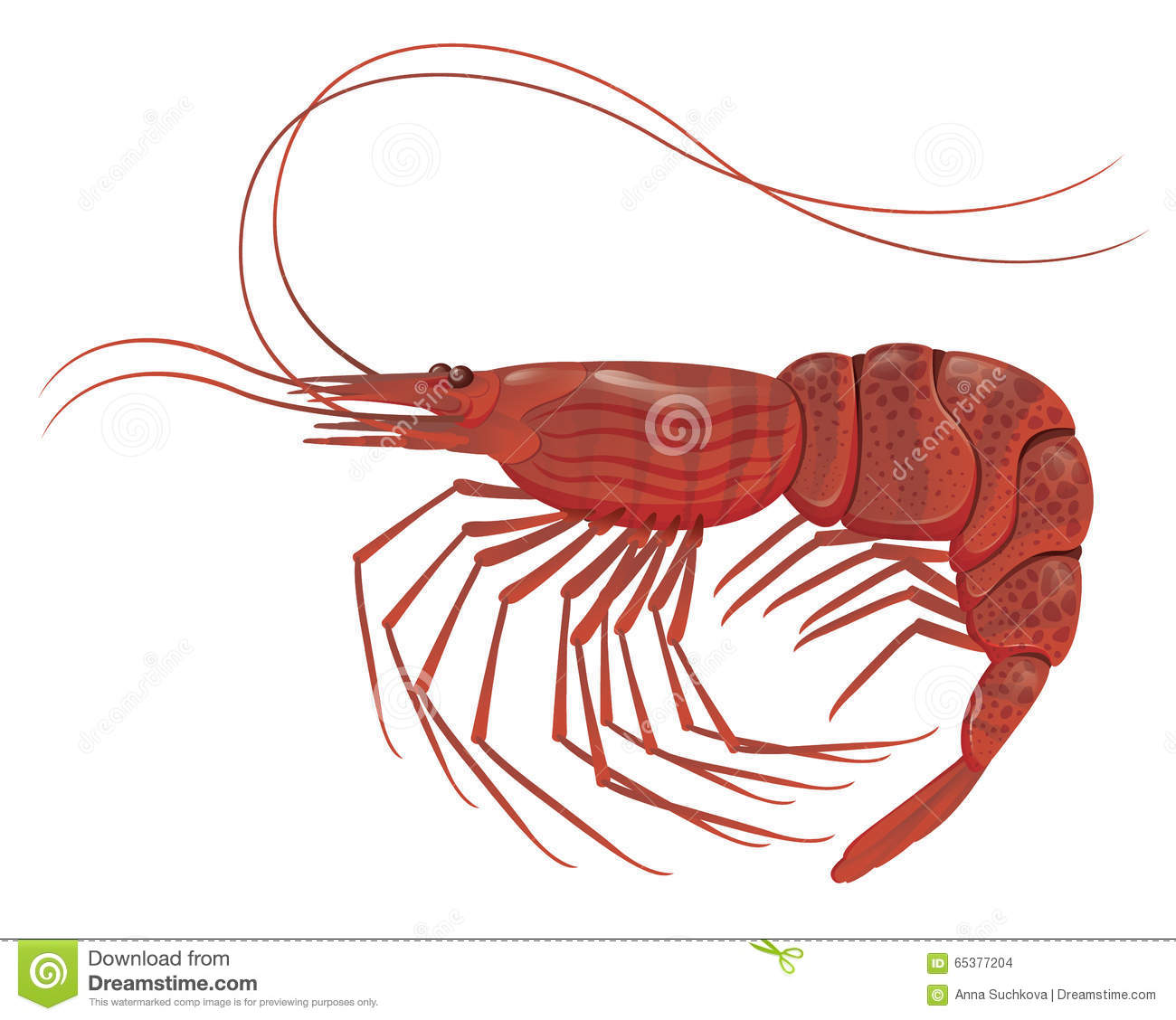 Dorable Shrimp Anatomy Veins Pictures - Physiology Of Human Body ...