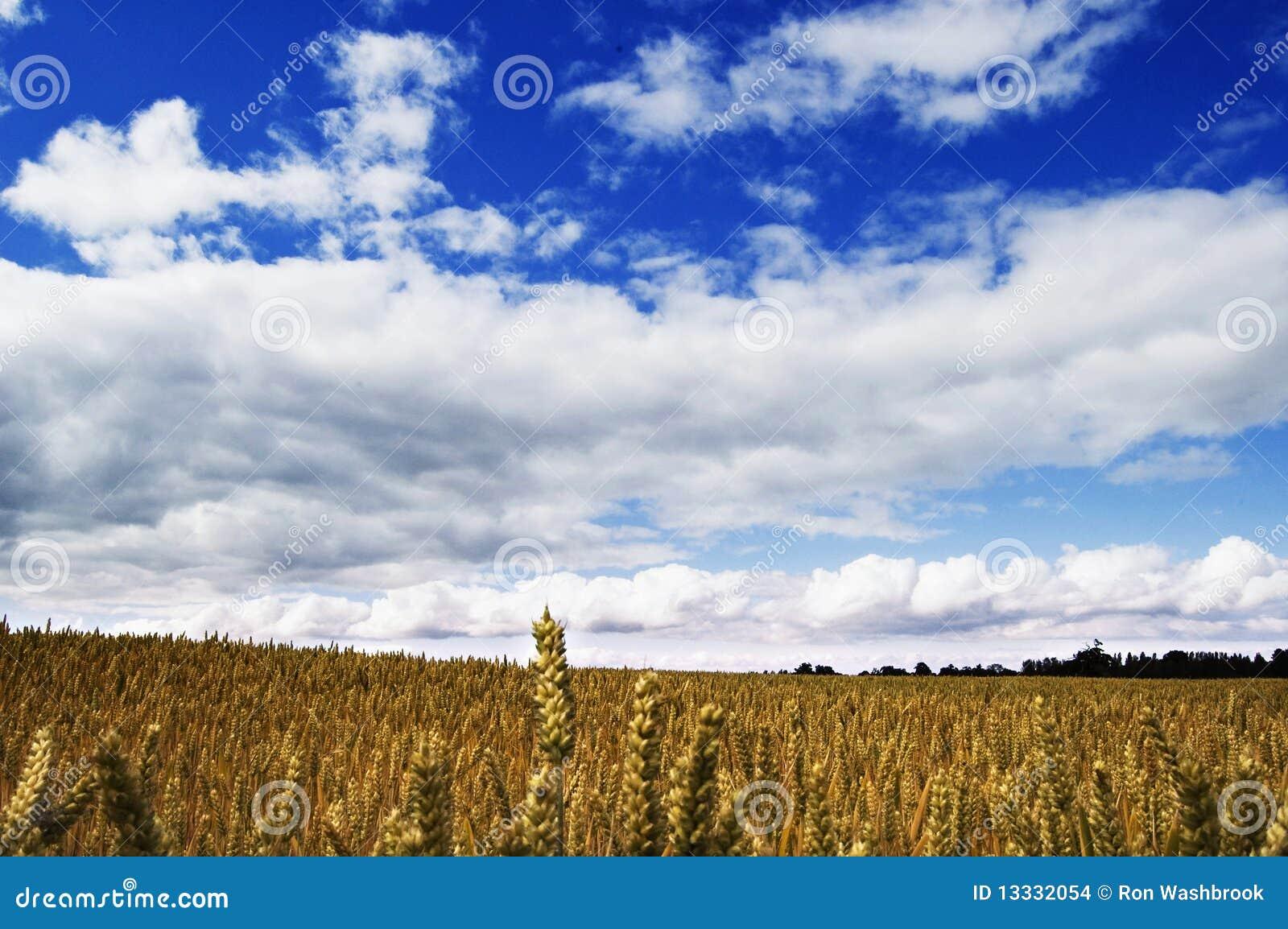 Shropshire błękitny niebo