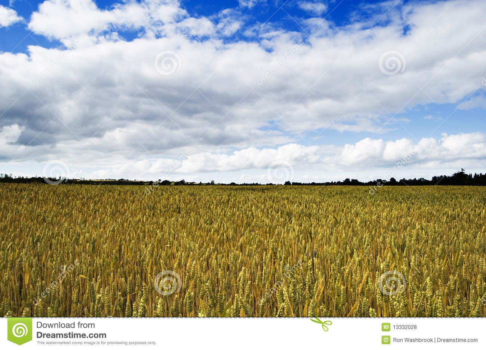Shropshire Wheat Fields