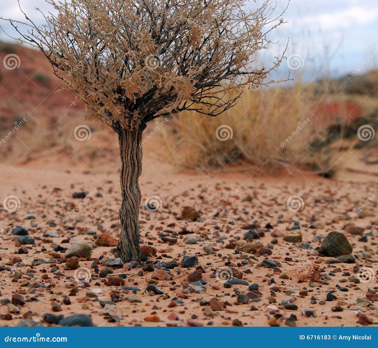 Shrub пустыни