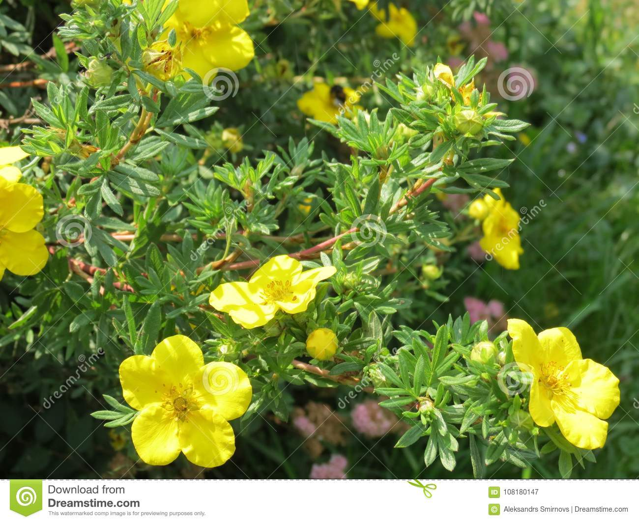 Bright Yellow Flowers For A Good Mood Stock Image Image Of Bright