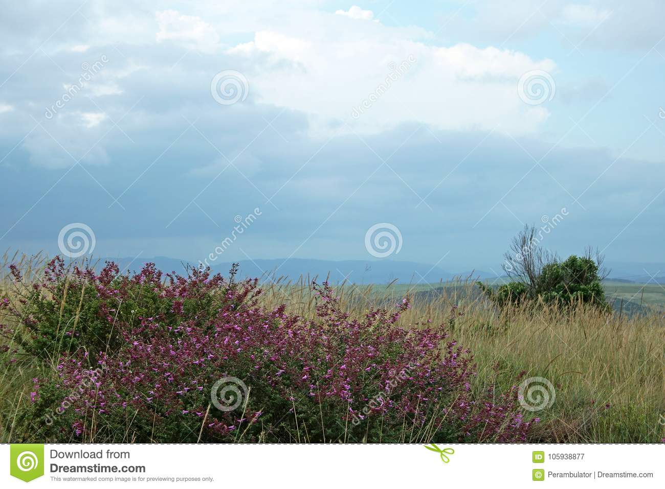 SHRUB WITH PURPLE FLOWERS IN GRASSLAND