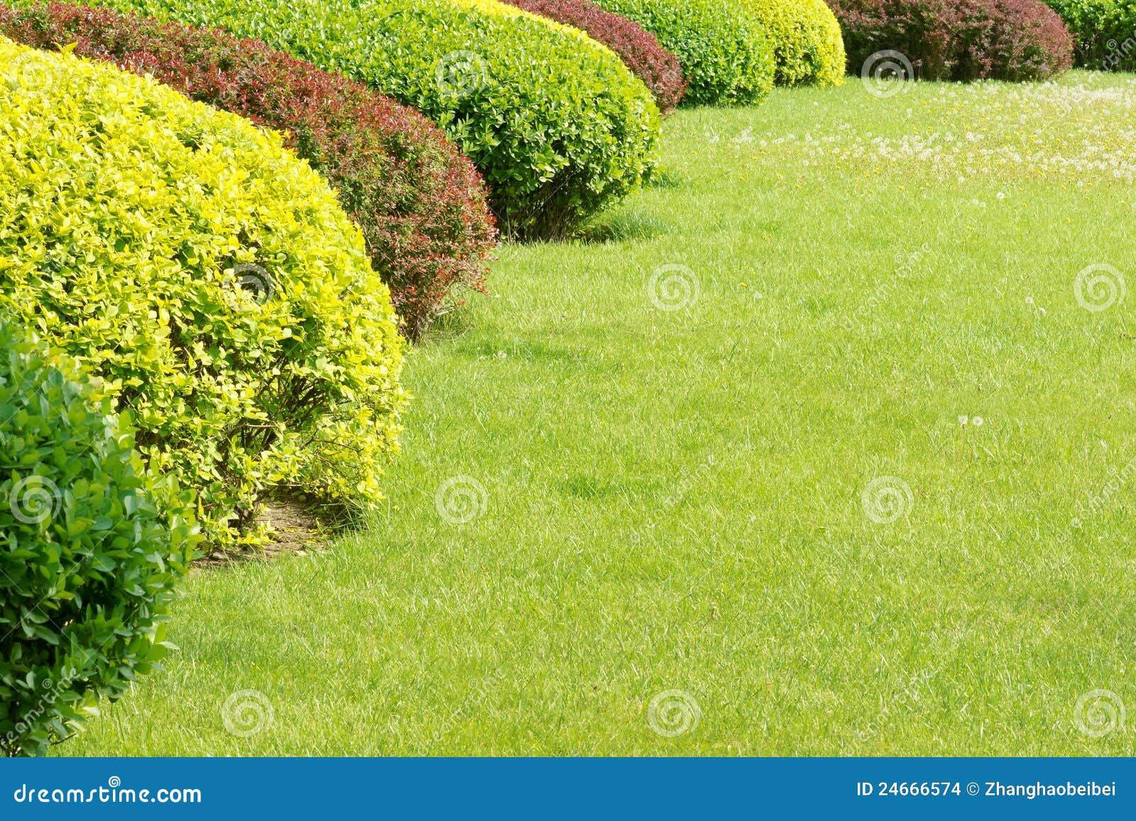 Shrubbery and grassplot